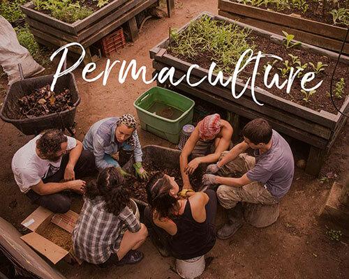 permaculture-thumbnail.jpg