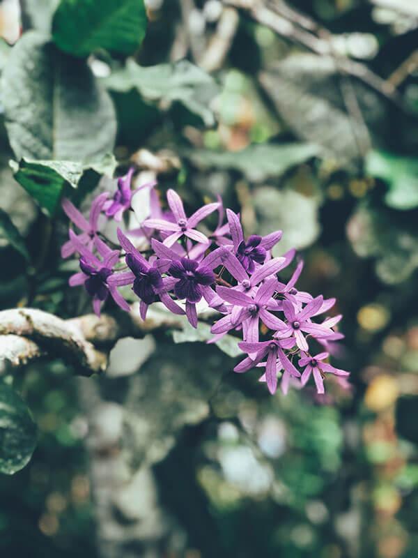 lavendar-flower.jpg
