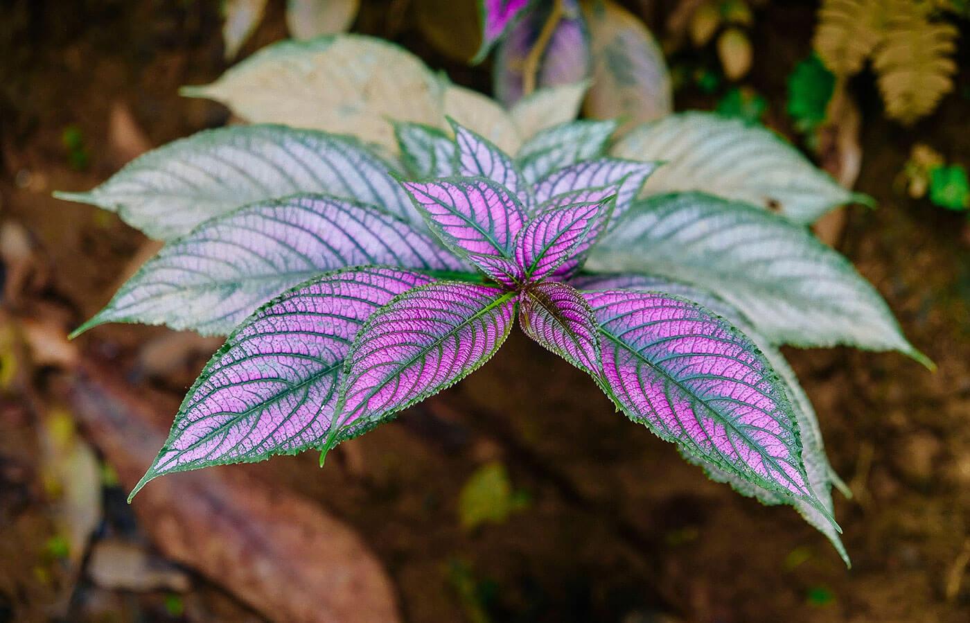 BotanicalCollection-purple (1).jpg