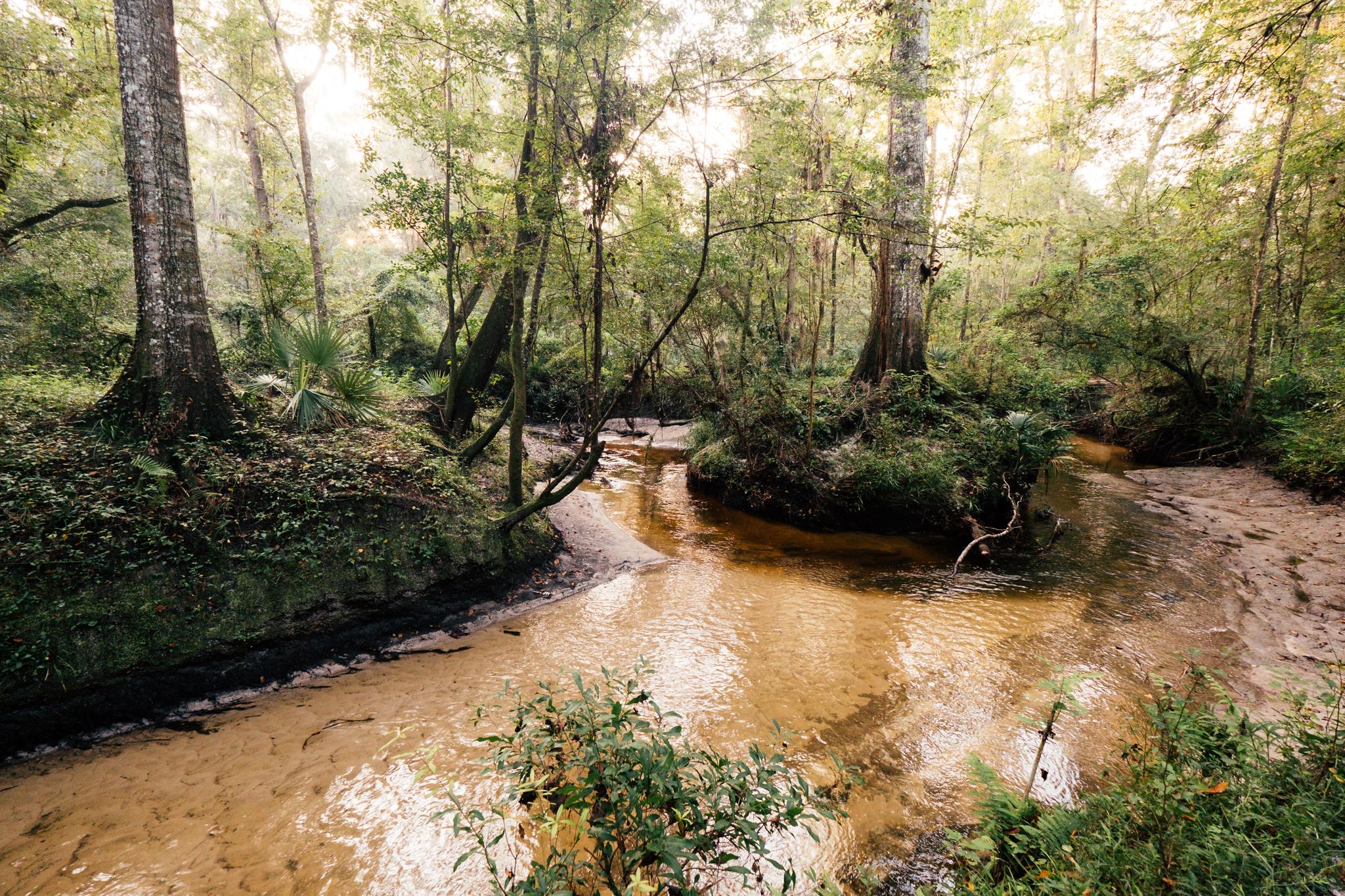 loblolly woods nature park -
