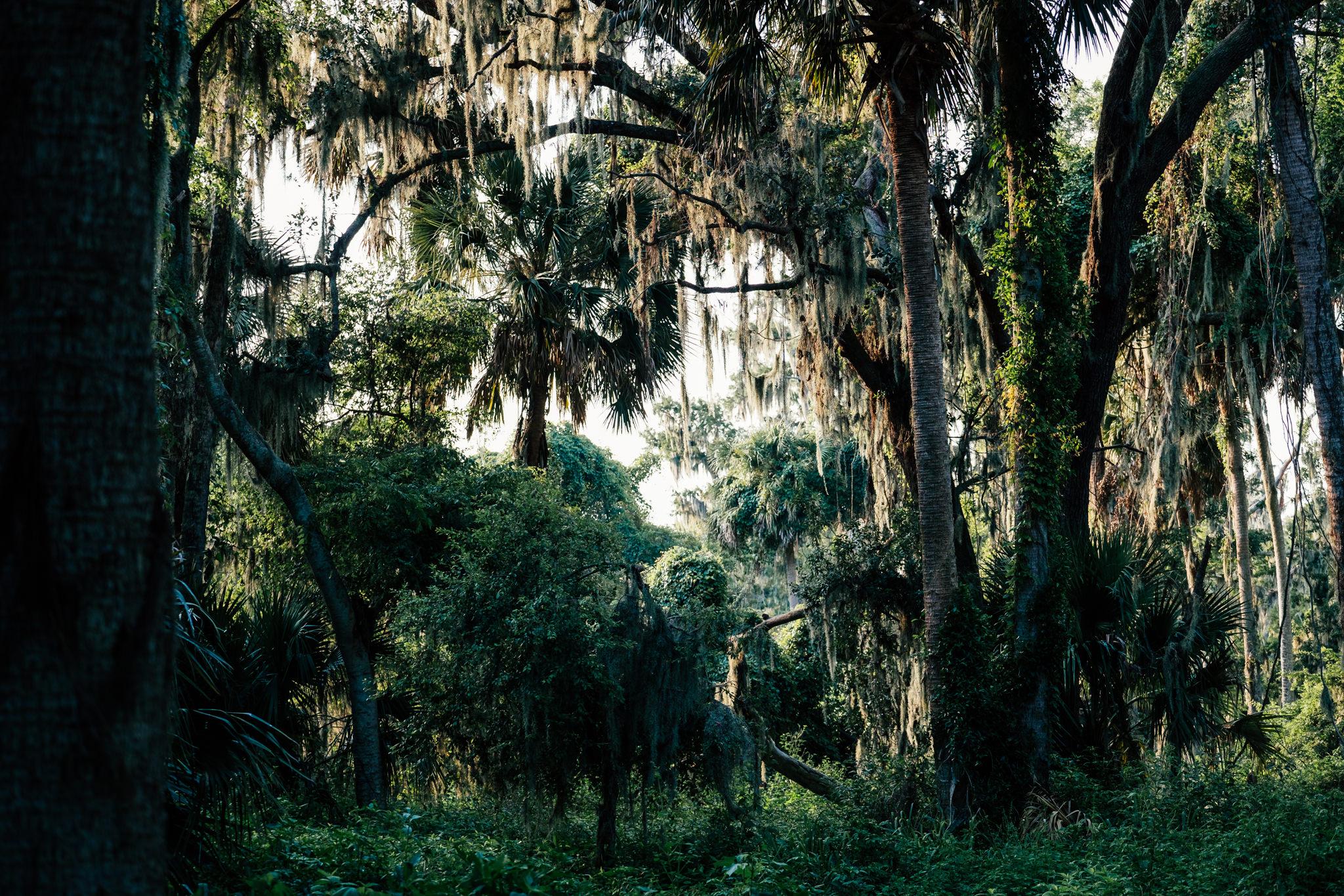 Palm Point-4.jpg