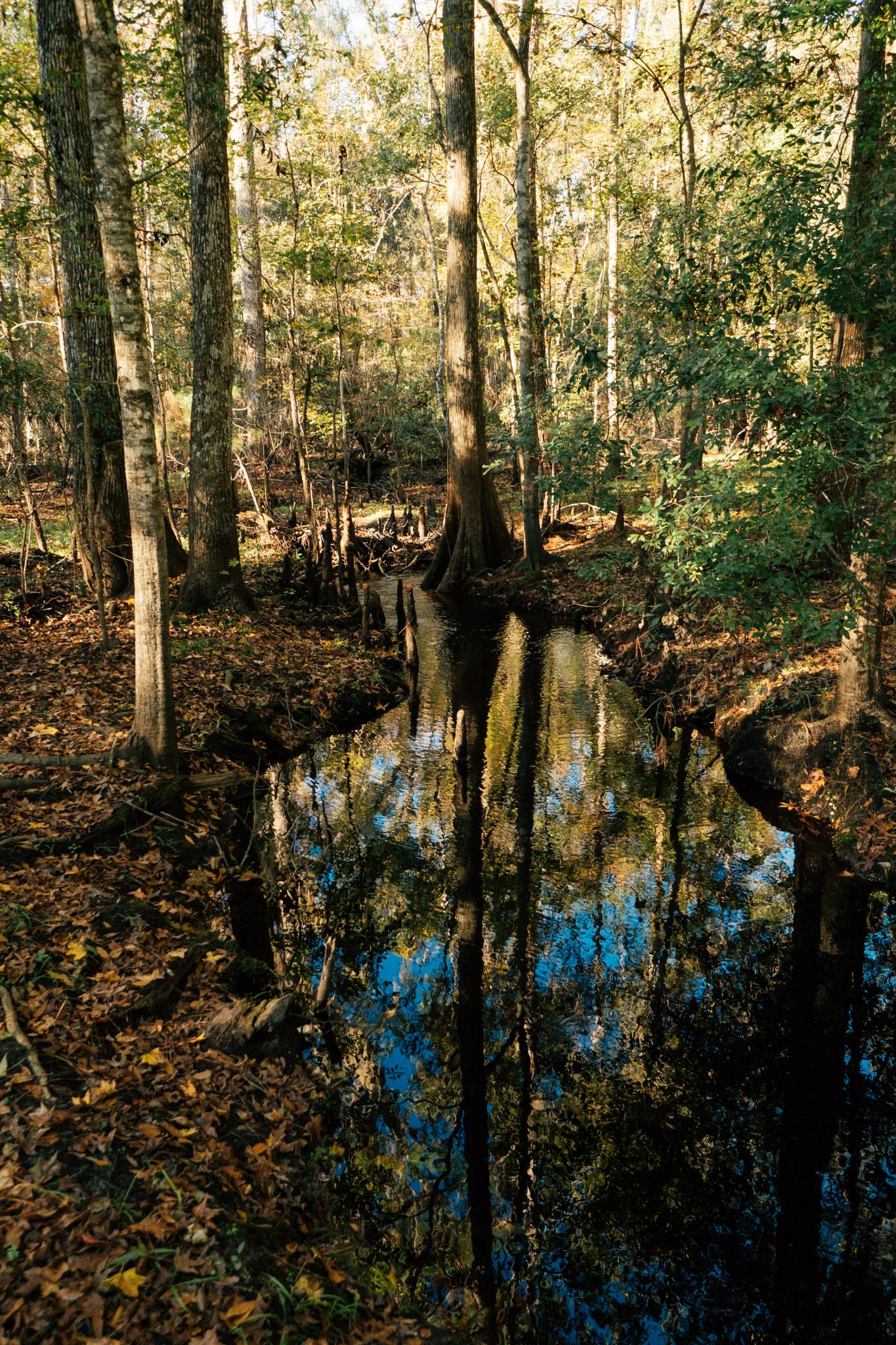 gum root nature park -
