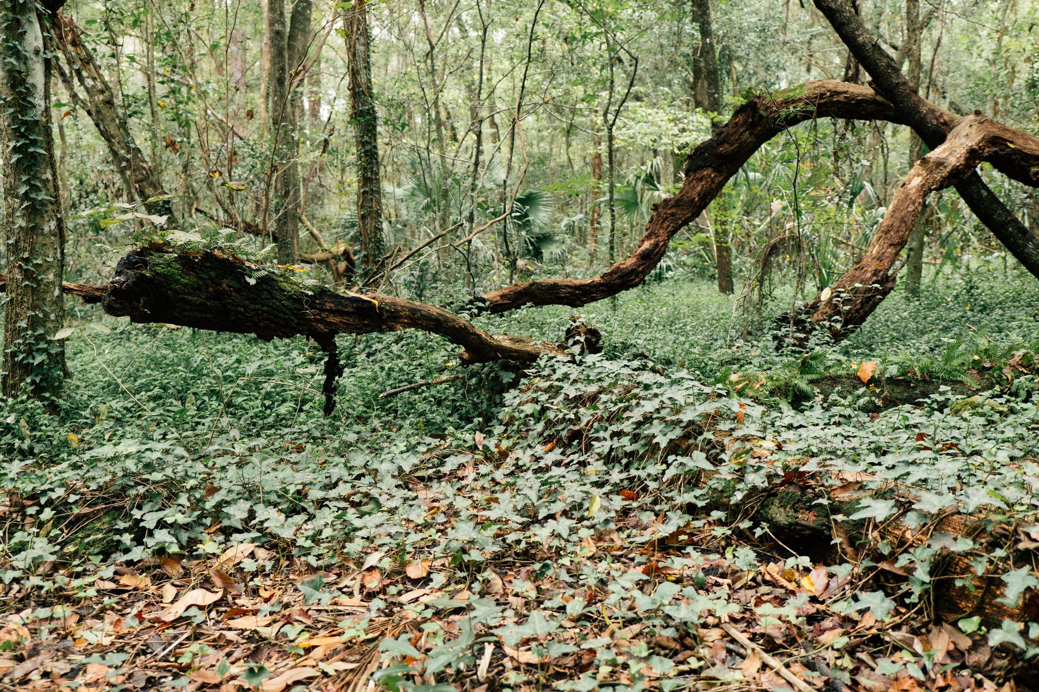 29th road nature park -