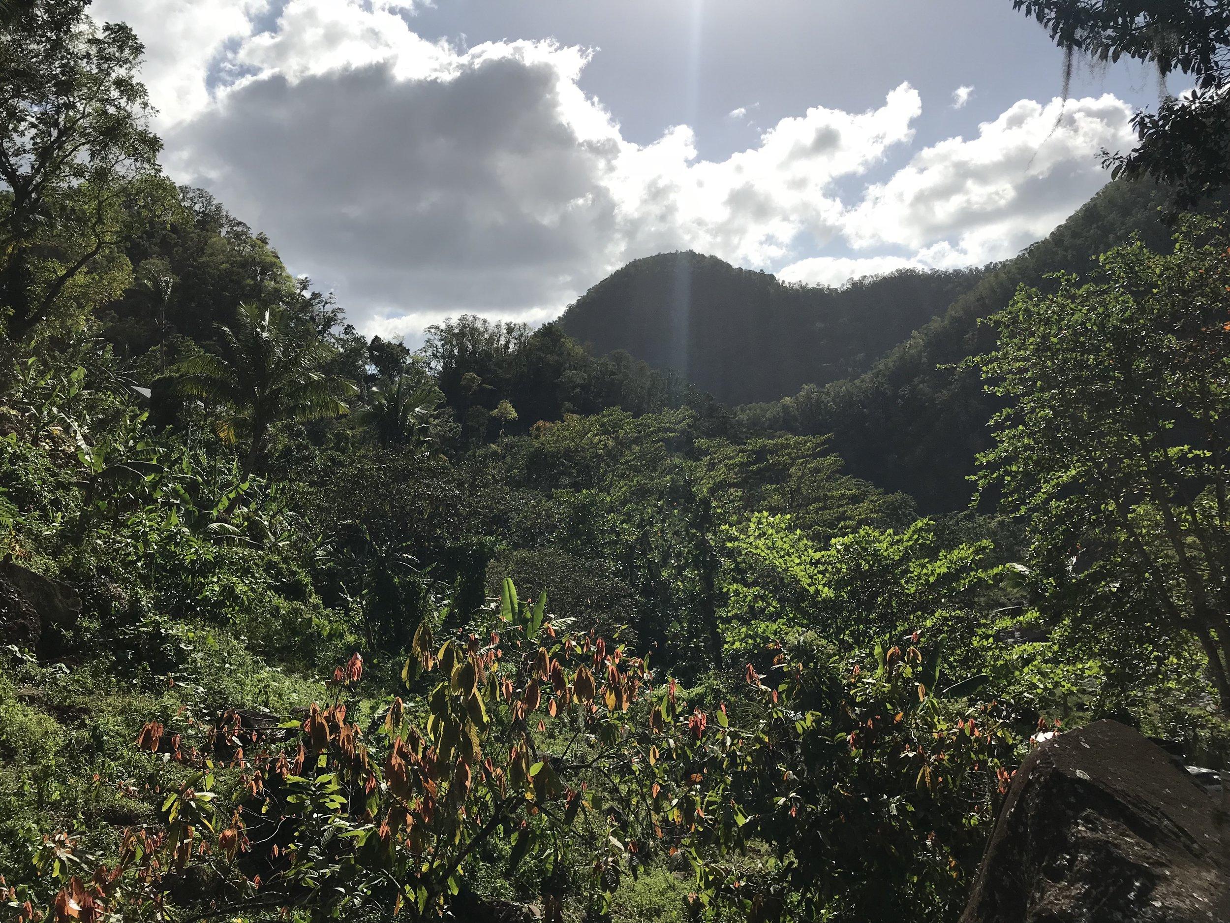 Coffee Plantation Views - RachelTravels.com