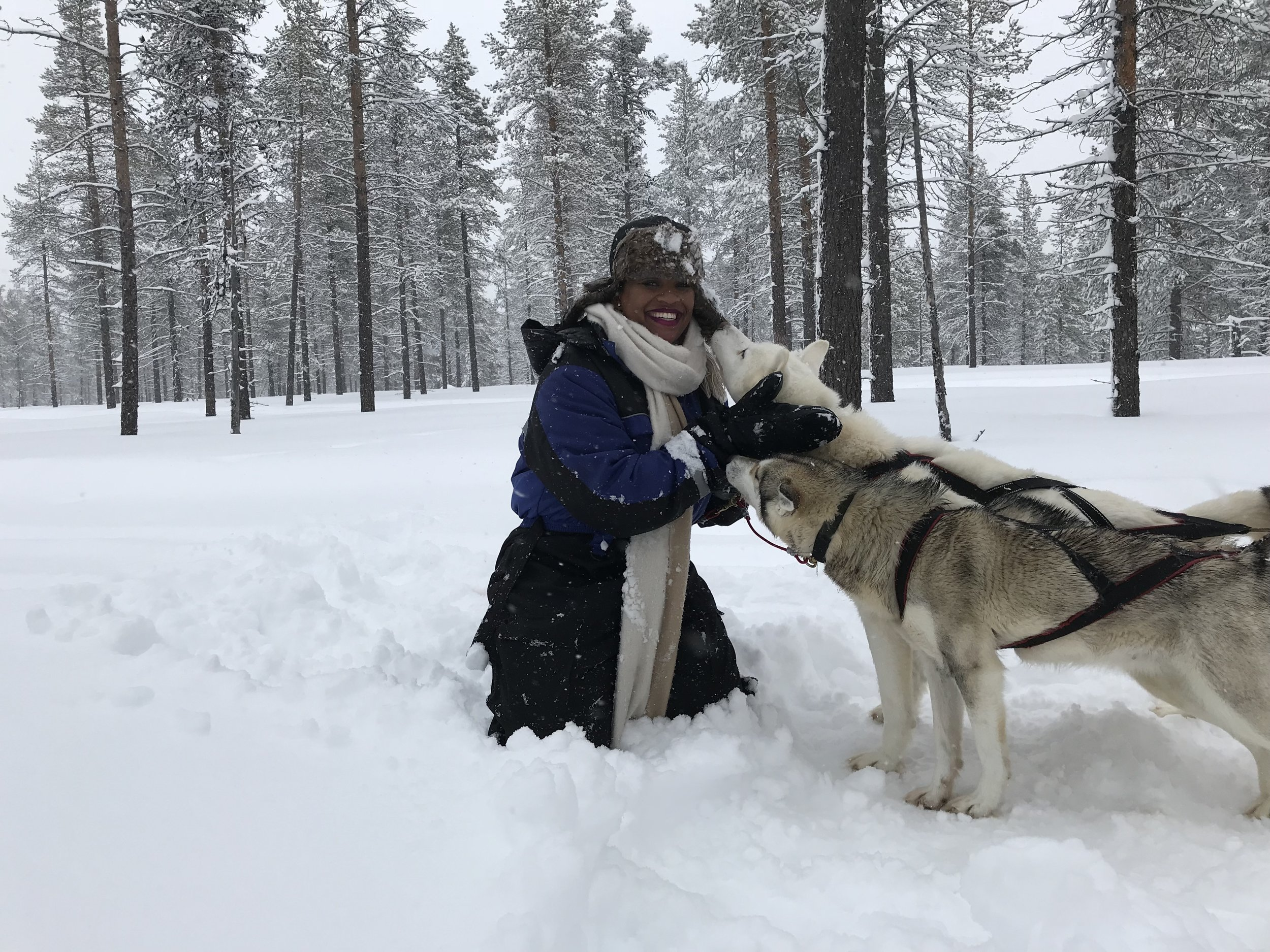 What to Do In The Arctic Circle of Finland - kakslaurrenanen Arctic Resort - Dog Sledding - RachelTravels.com