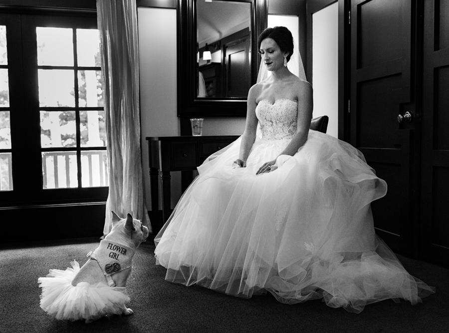 bride and dog.jpg