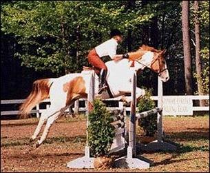 horse jump lifeguard.png