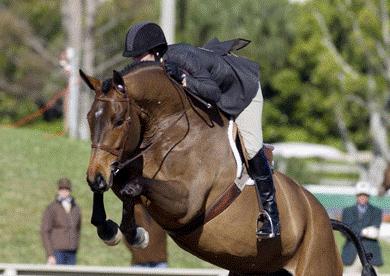 horse jump11.png