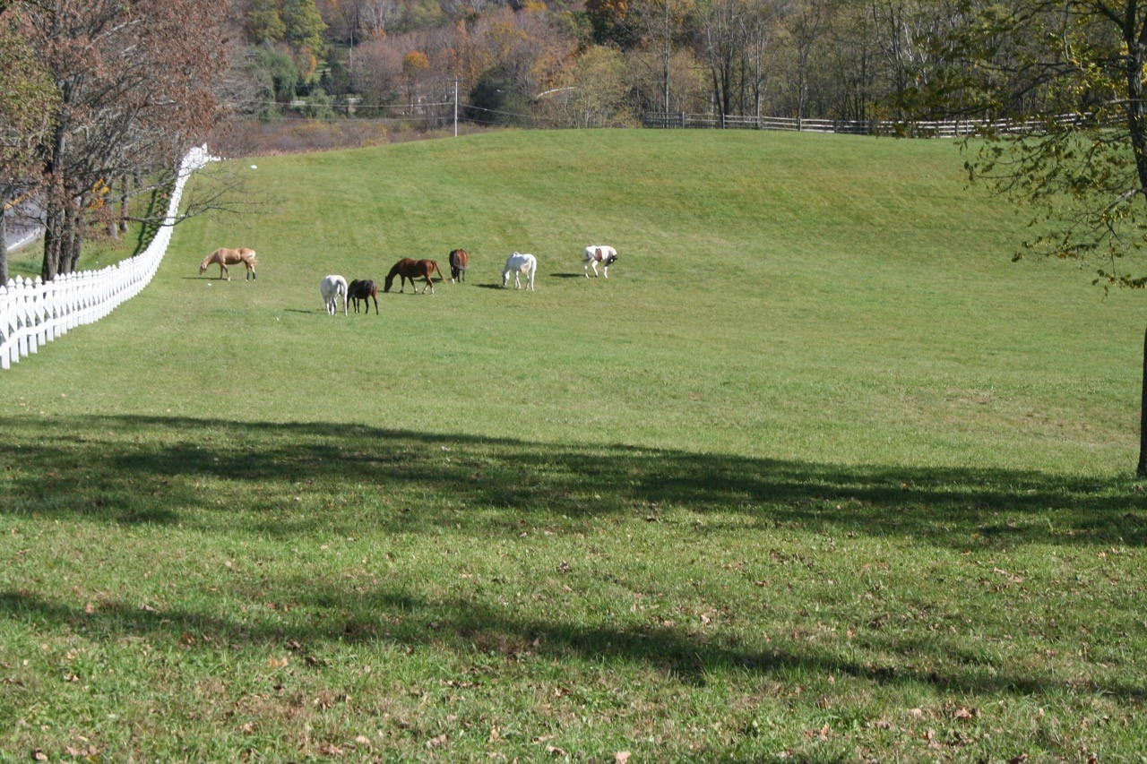 of pasture -