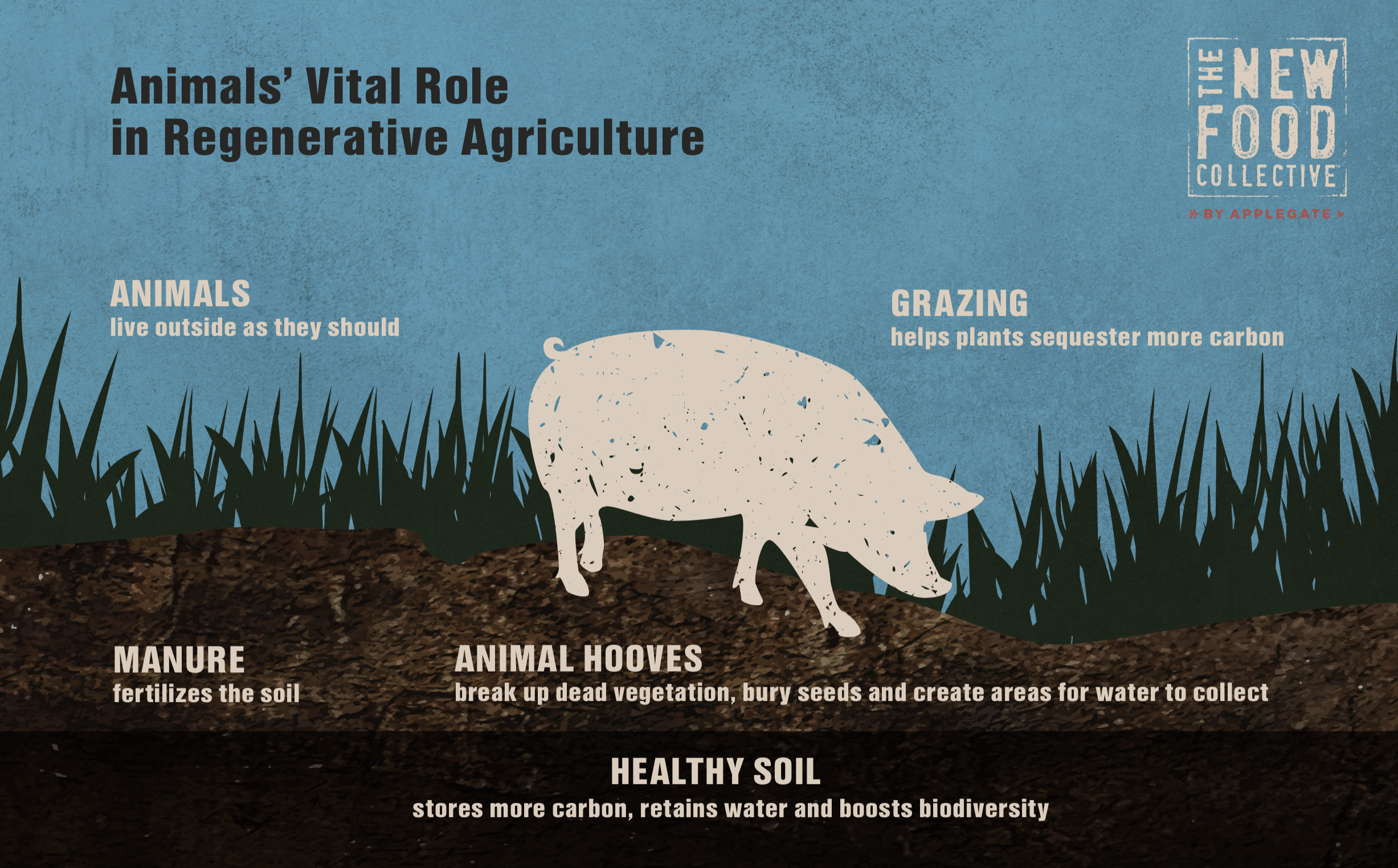 Animal's Vital Role in Regenerative Agrigulture