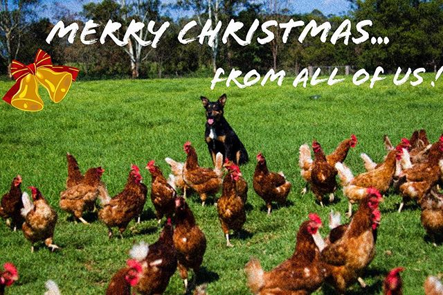 WARMEST WISHES .. ✨ from our family to your family, at this special time of year !  It is YOU, our loyal customers who make everyday special for us !  THANK YOU for choosing Manning Valley Eggs ! 🙏 ❤️🎄✨ #merrychristmas #gratitude #manningvalleyeggs
