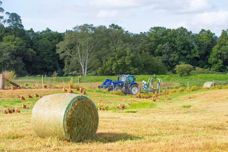 manning-valley-eggs-pasture-bails.jpg