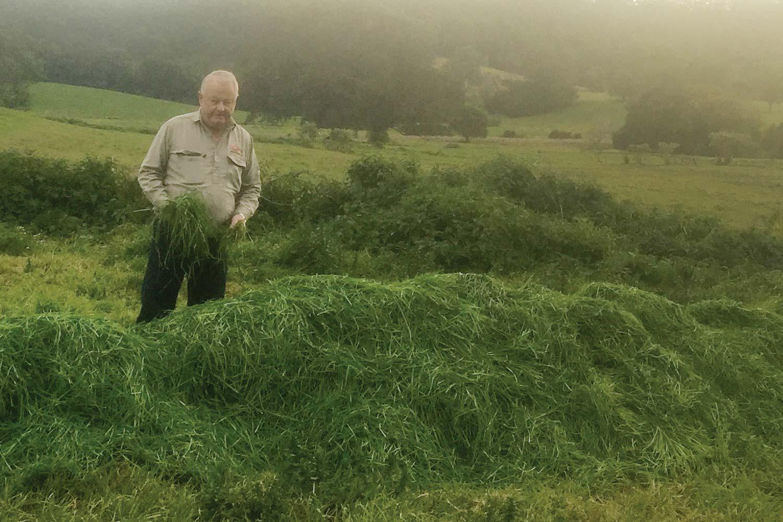 manning-valley-cut-grass.jpg