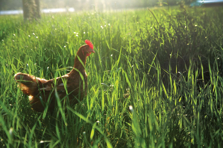manning-valley-long-grass.jpg
