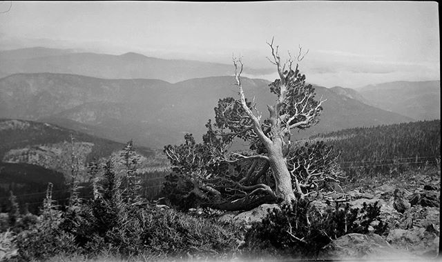 "Negative numbers 25 - 28 from the Rocky Mountain Nat. Park Album - 1924 Captioned, ""timberline views"" #foundphoto #snapshot #familyslideshow #longlivefilm #nationalparks #rockymountainnationalpark  #vacationpic #thatview #takeahike #treeline #1920sfashion"