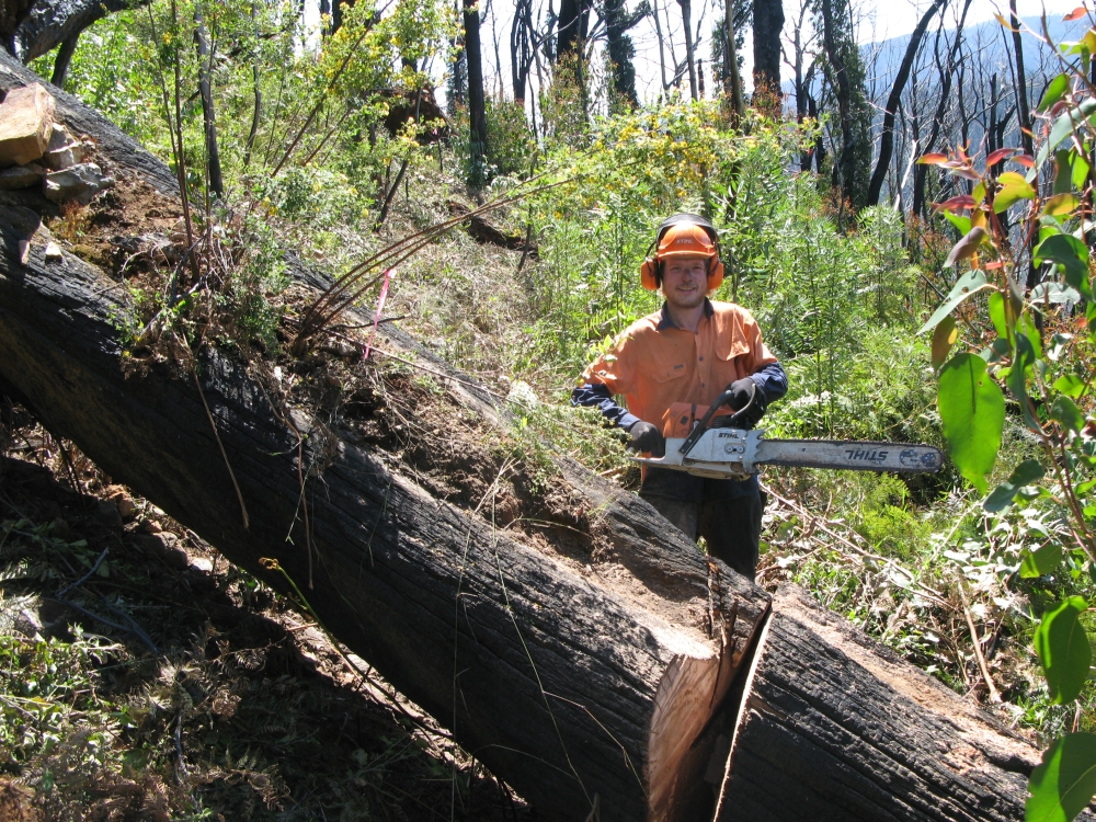 Clearing fallen trees