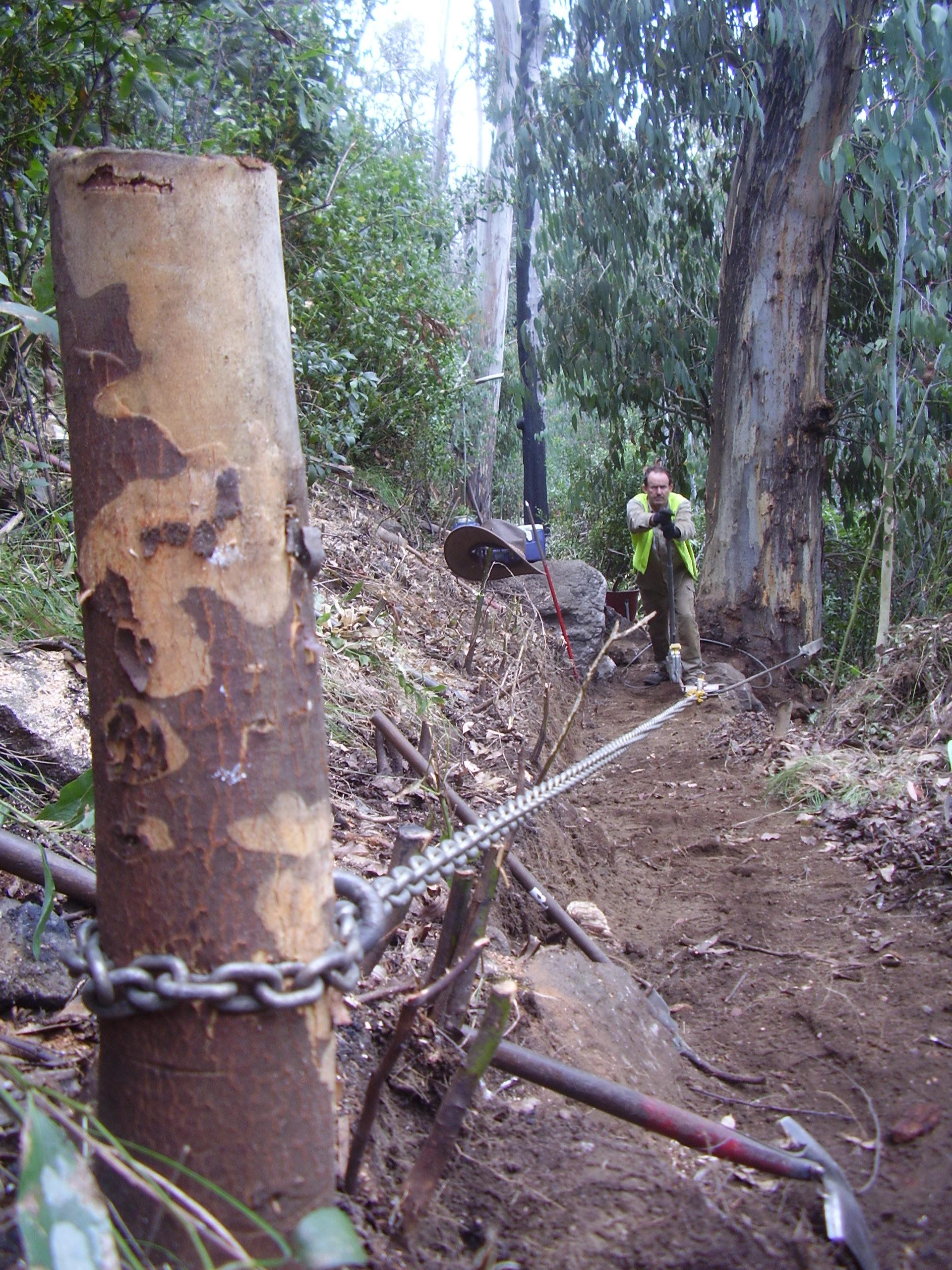 PH_Winching_stumps.JPG