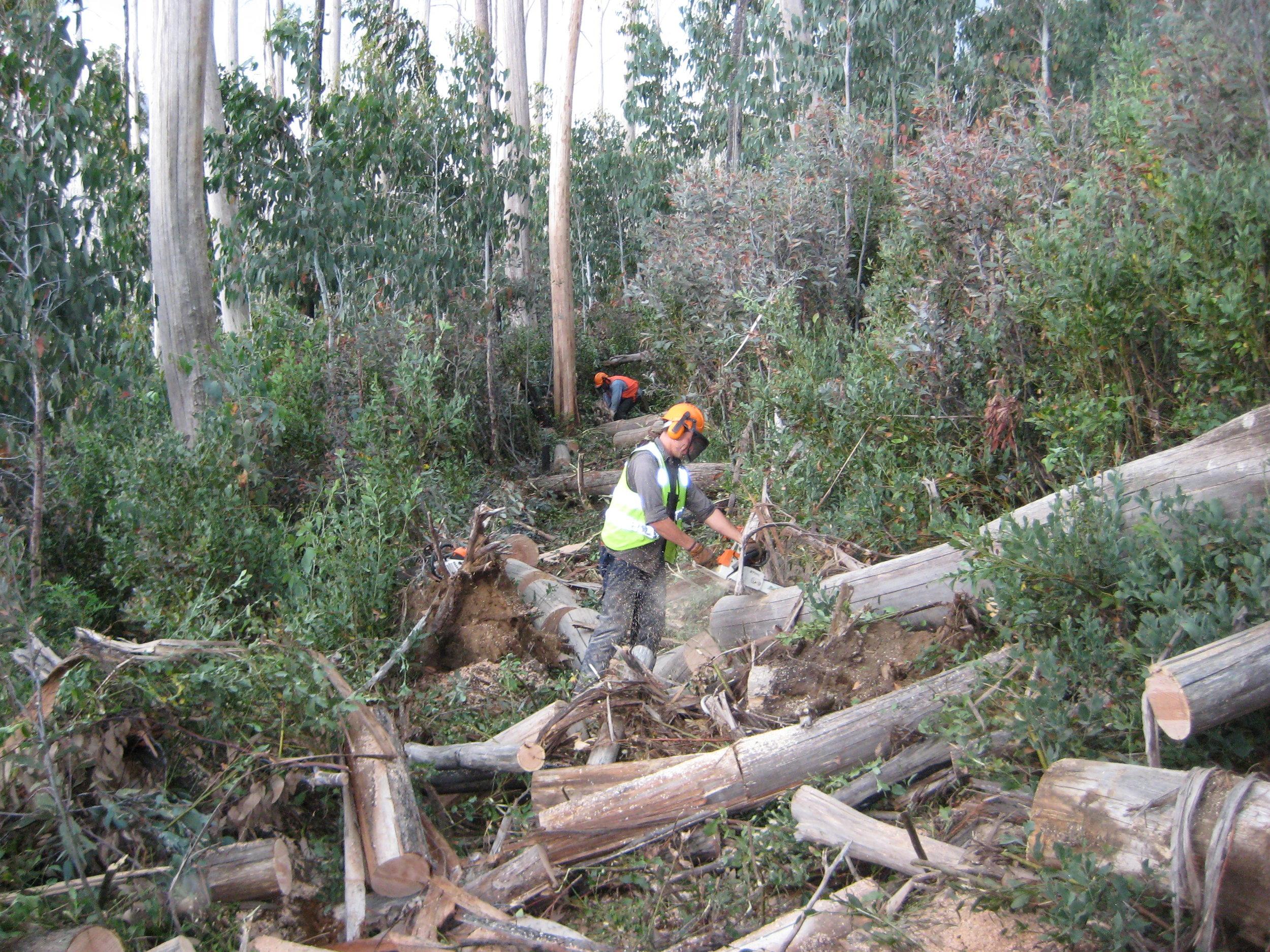 Removing fallen trees