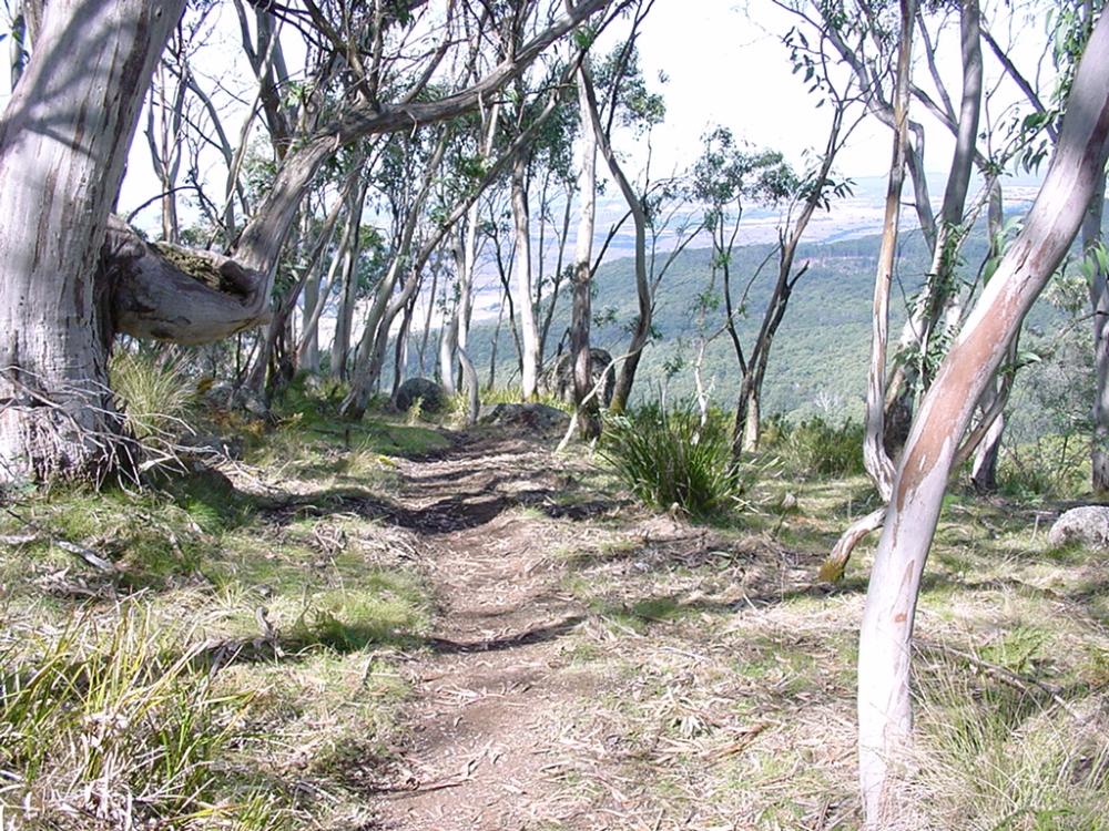 Beeripmo_trackinsubalpineforest.jpg