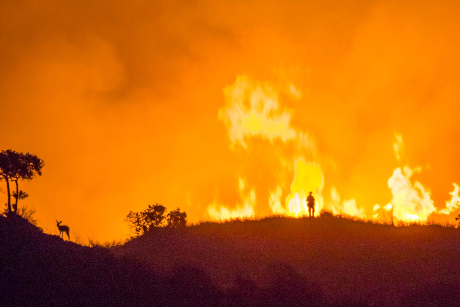 Wildfires -