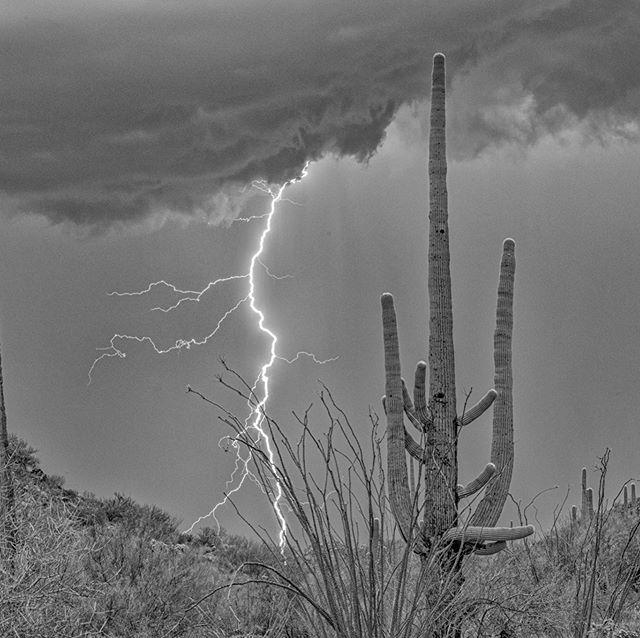 Storm chasing with #serendipityvisualsworkshop last month I learned to zoom in where I think the lightning will be otherwise the sparks ⚡️ will look small #lightning  #monsoon #azmonsoon #visittucson #visitarizona #saguaronationalpark #cactus #nationalparks #findyourpark #blackandwhitephotography