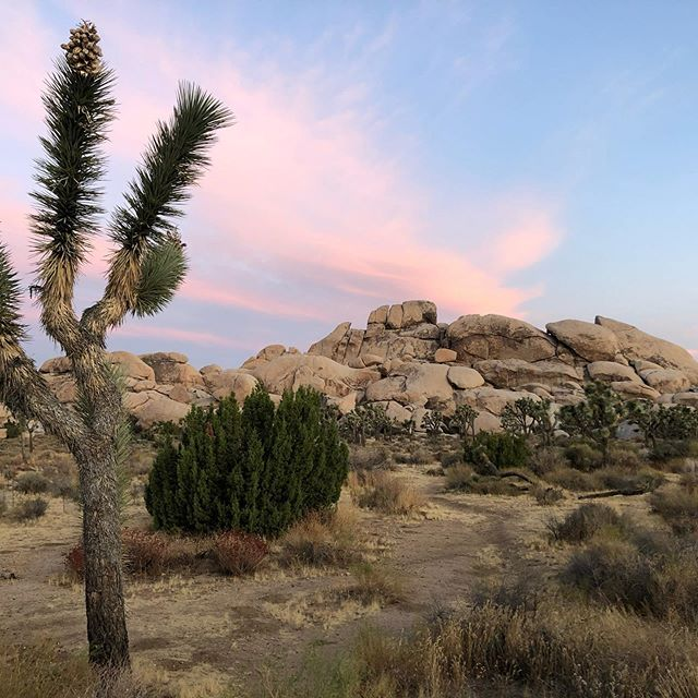 Sunrise at Hall of Horrors in Joshua Tree National Park #joshuatreenationalpark #nationalpark #findyourpark #sunrise #visitcalifornia