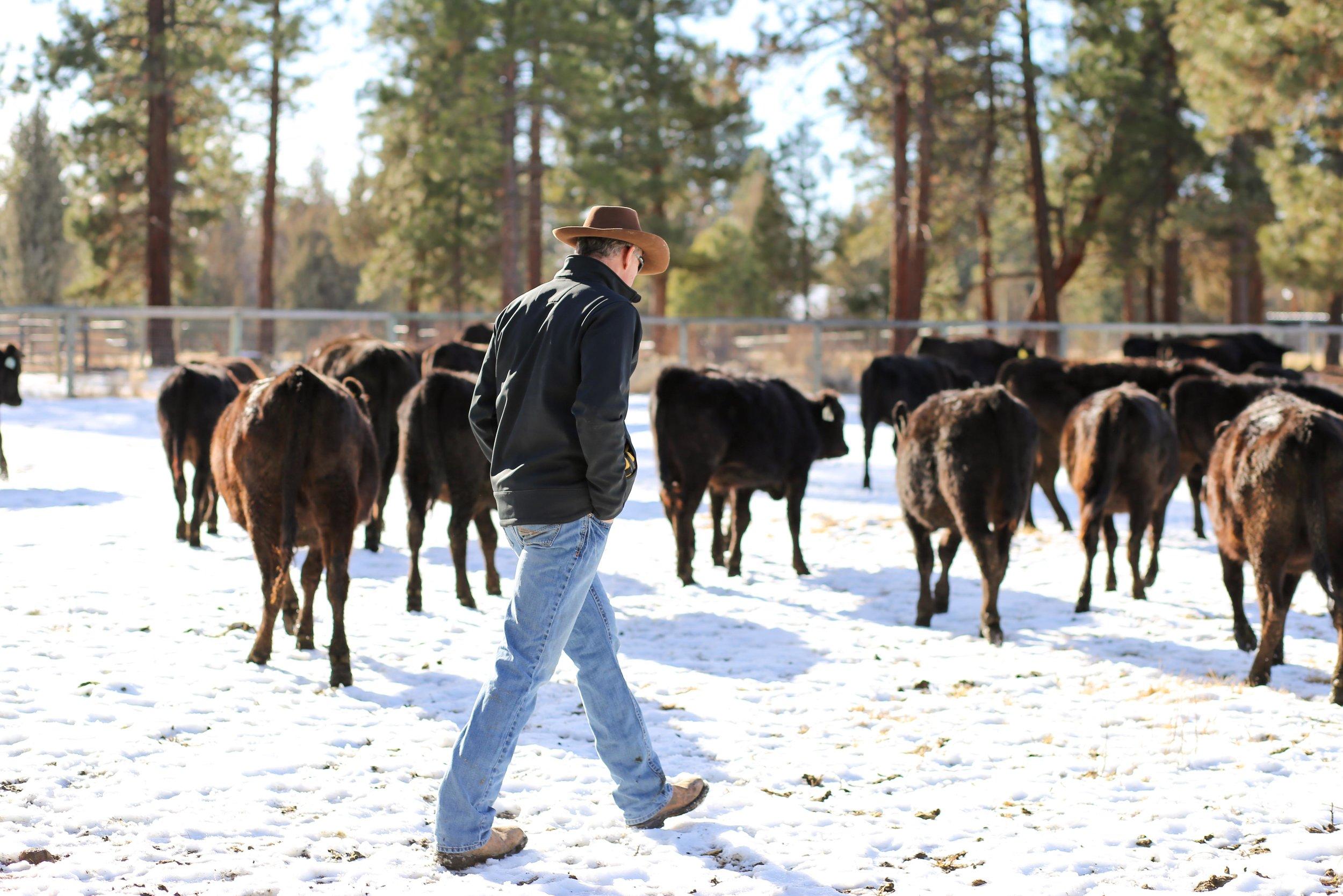 dad cows-1.jpg
