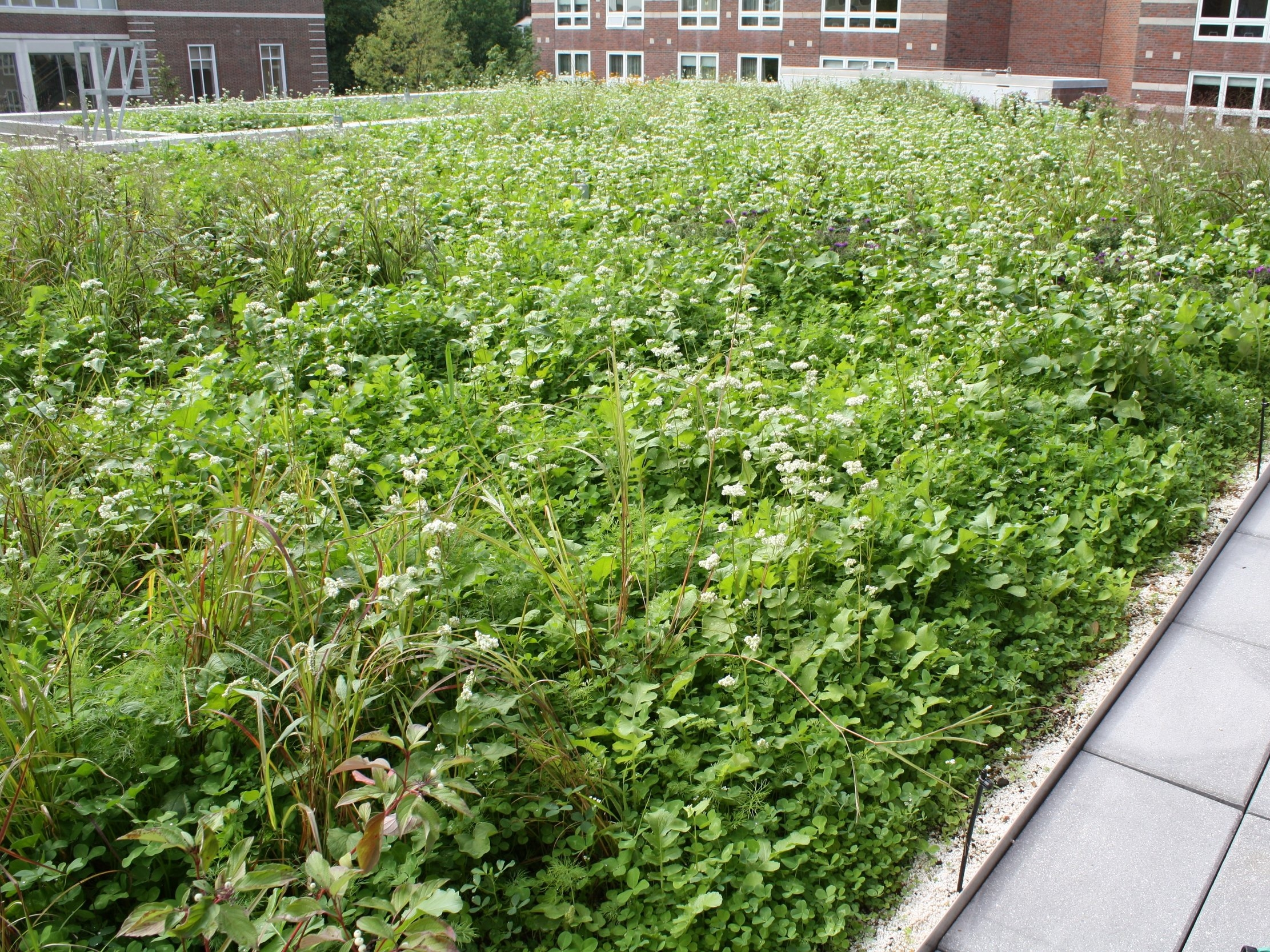 Credit: Recover Green Roofs
