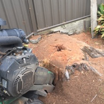 King Stump Removal Before
