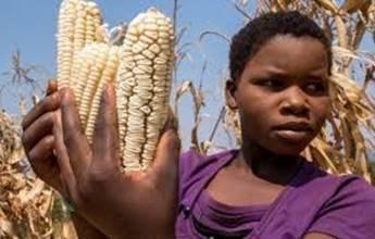 corn-2.jpg