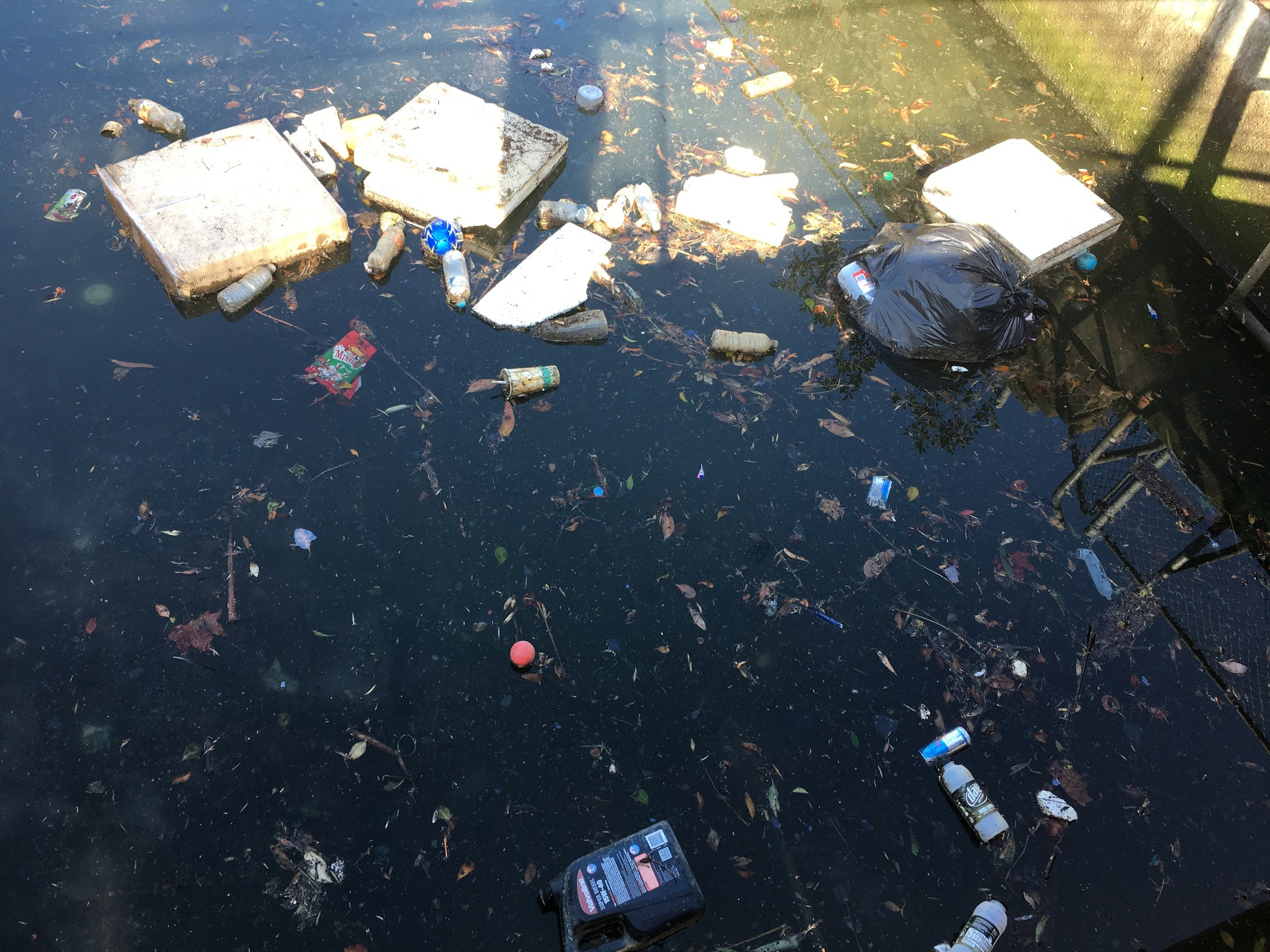 Rubbish in the canal at the southern end of Beverley Park Golf Course