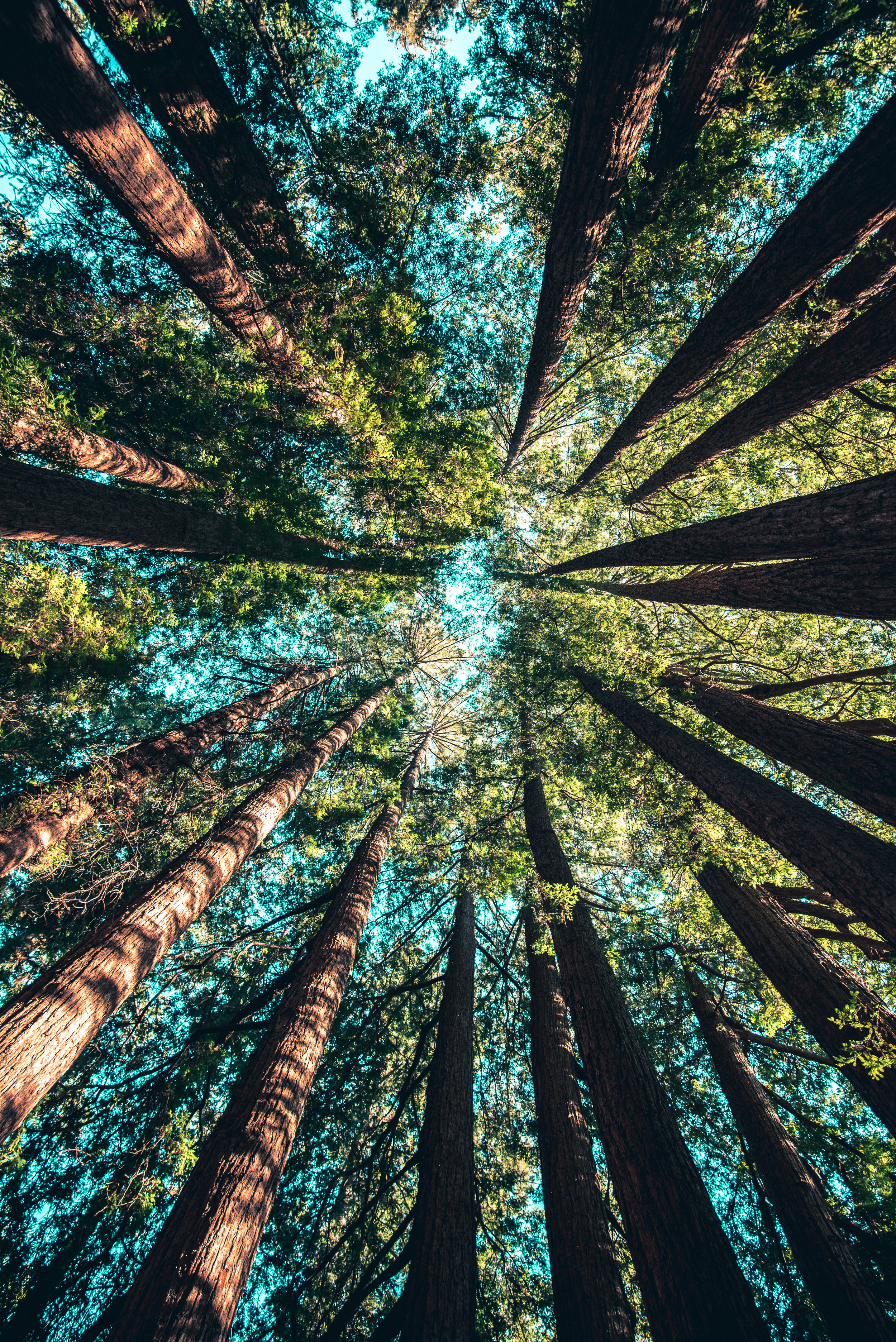 Fast-growing ForrestBrown develops African forest by sponsoring 4,500 new trees -