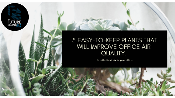 5 easy-to-keep plants that will improve office air quality..png