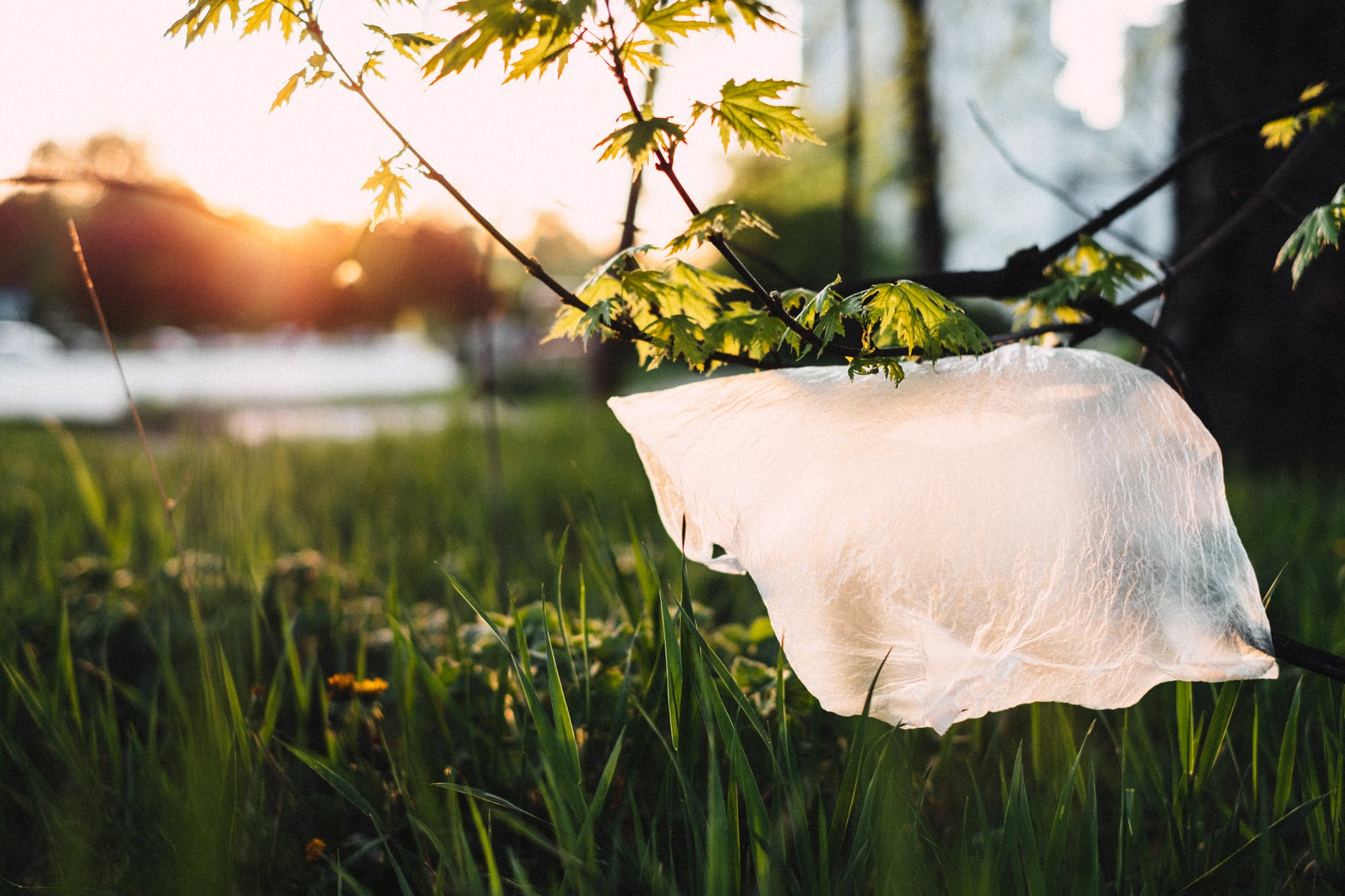 Lidl trials removal of 9p plastic bags in Wales -