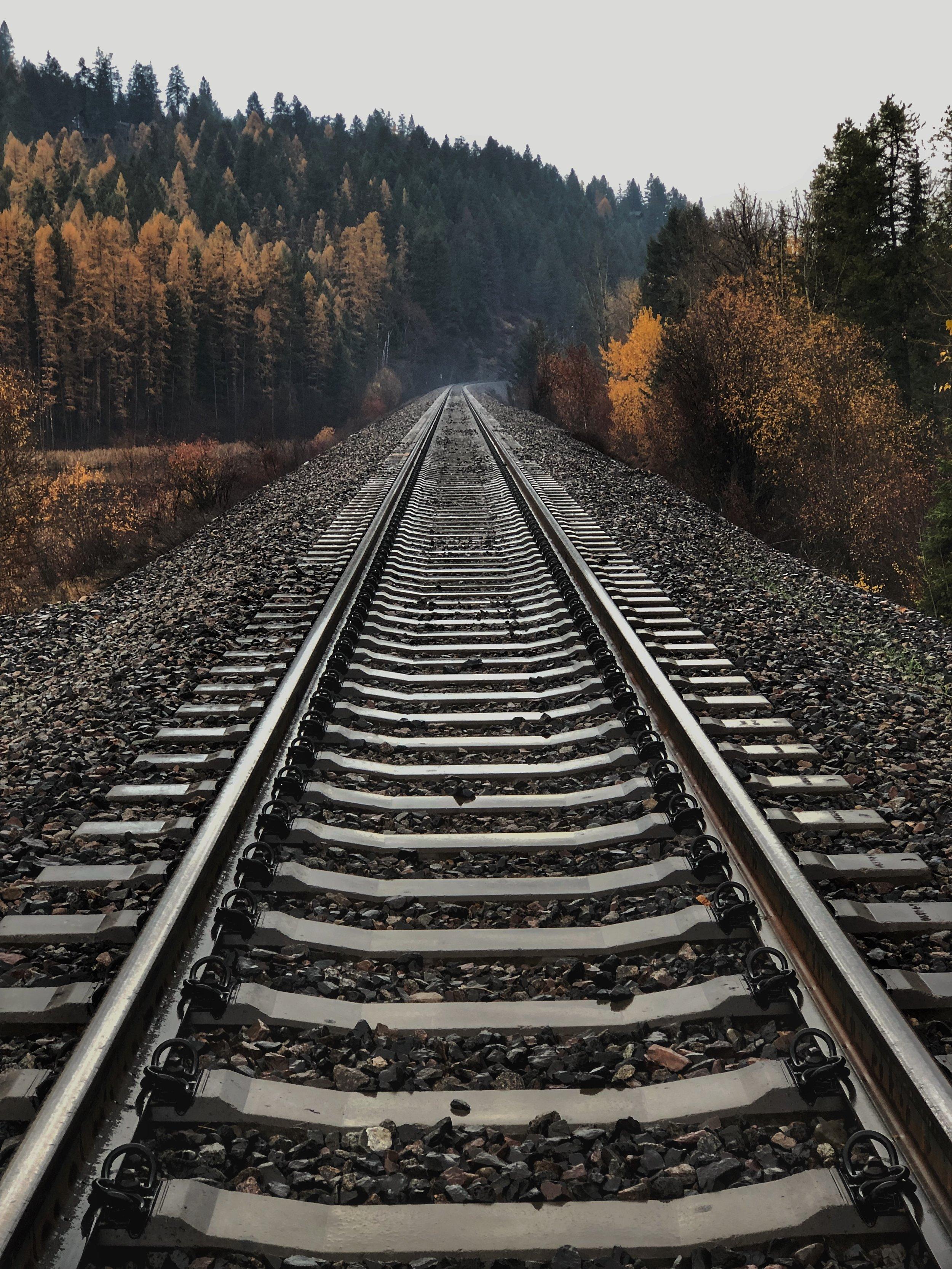 Network Rail tasked with boosting biodiversity around UK train tracks -