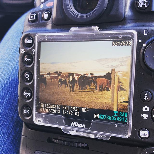 Taking picture of calves makes me happy 😃 what something that makes you happy!?