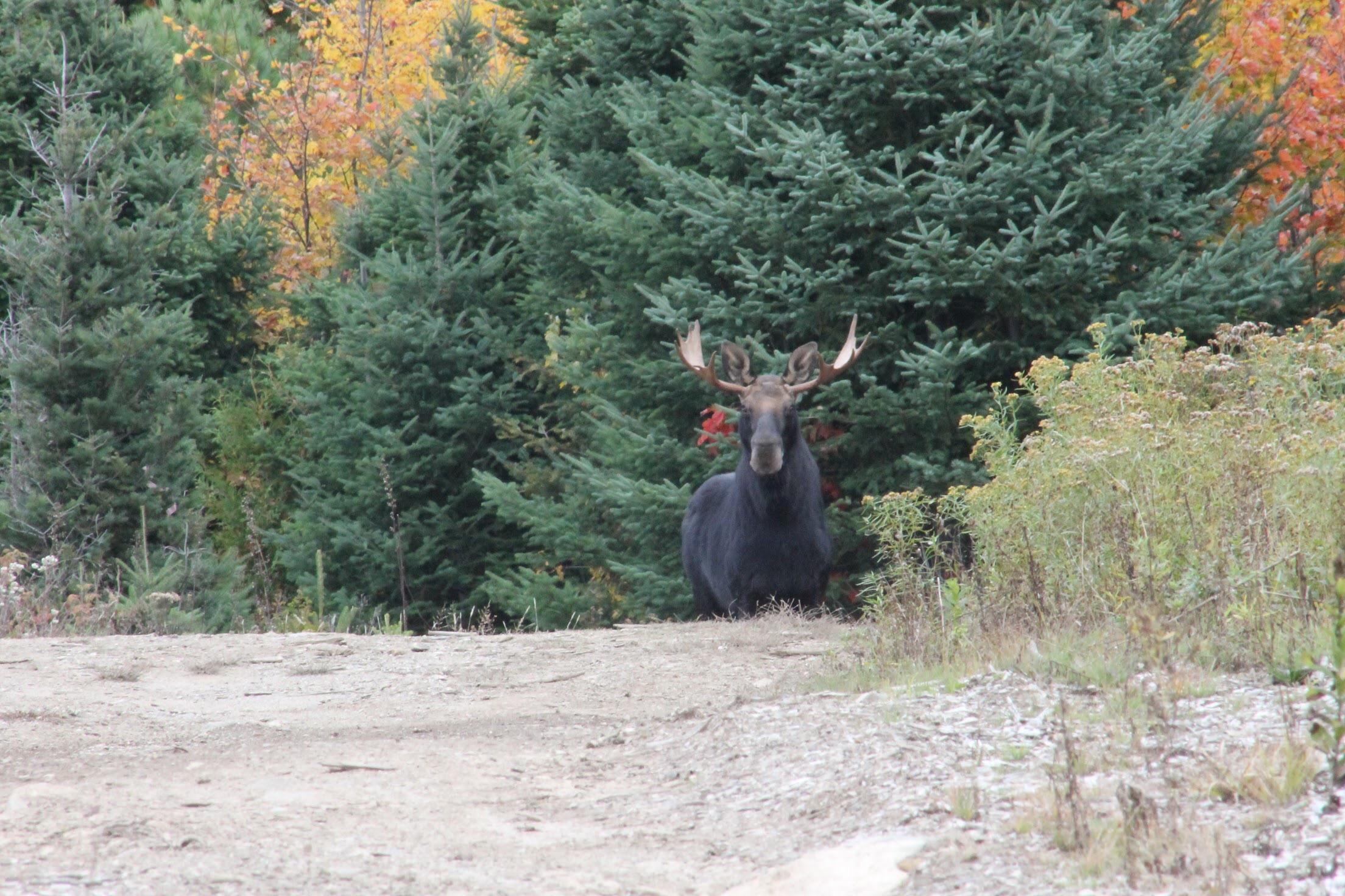 bull-moose-van-tour.jpg