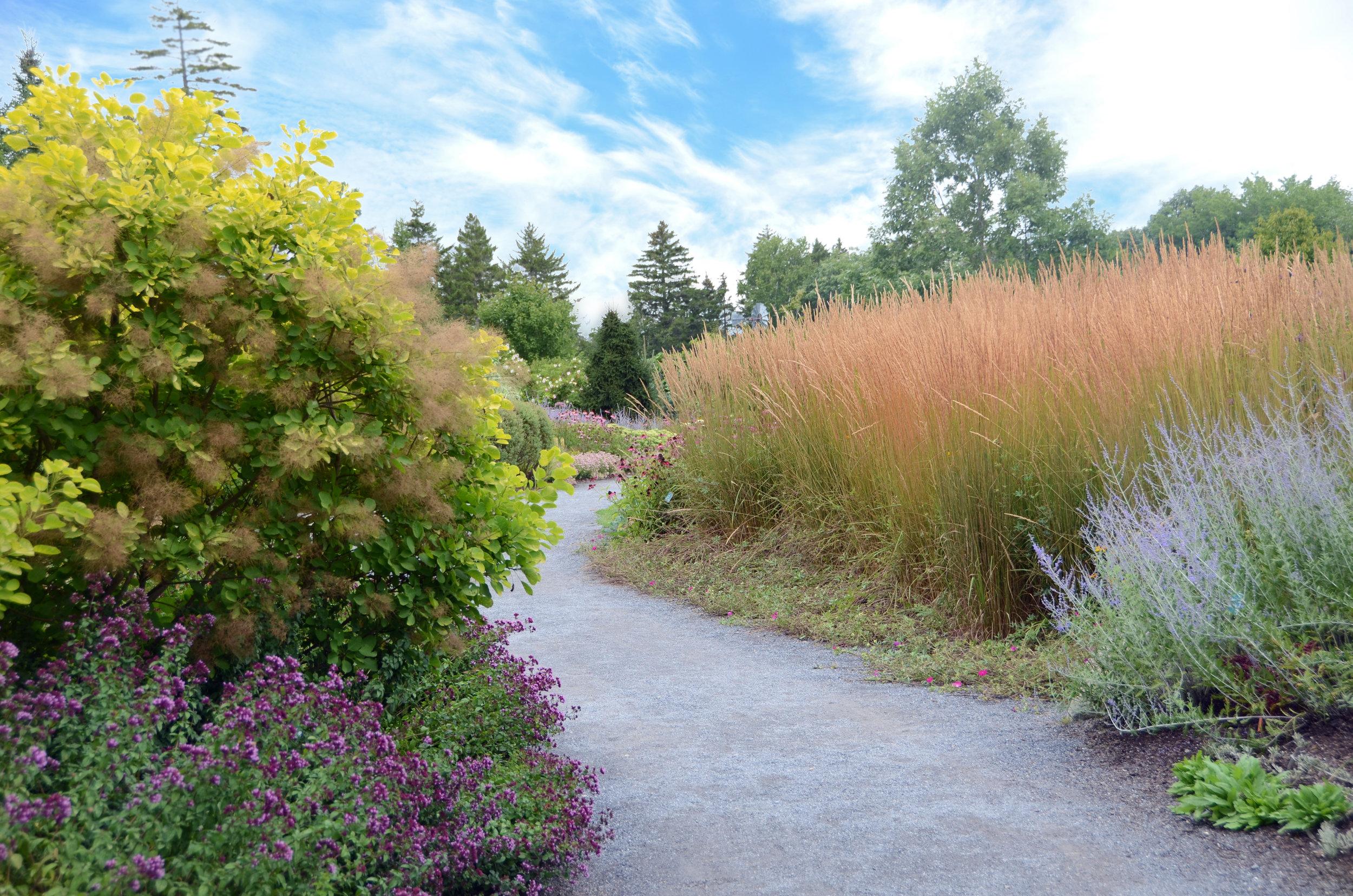 Great-Lawn-edge-path-DSC_7344.jpg
