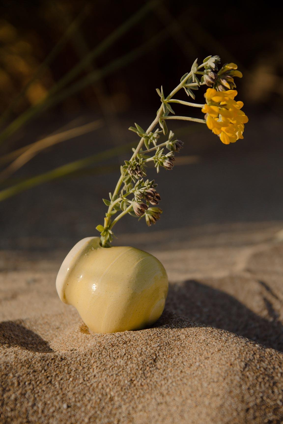 plumo_flower.jpg