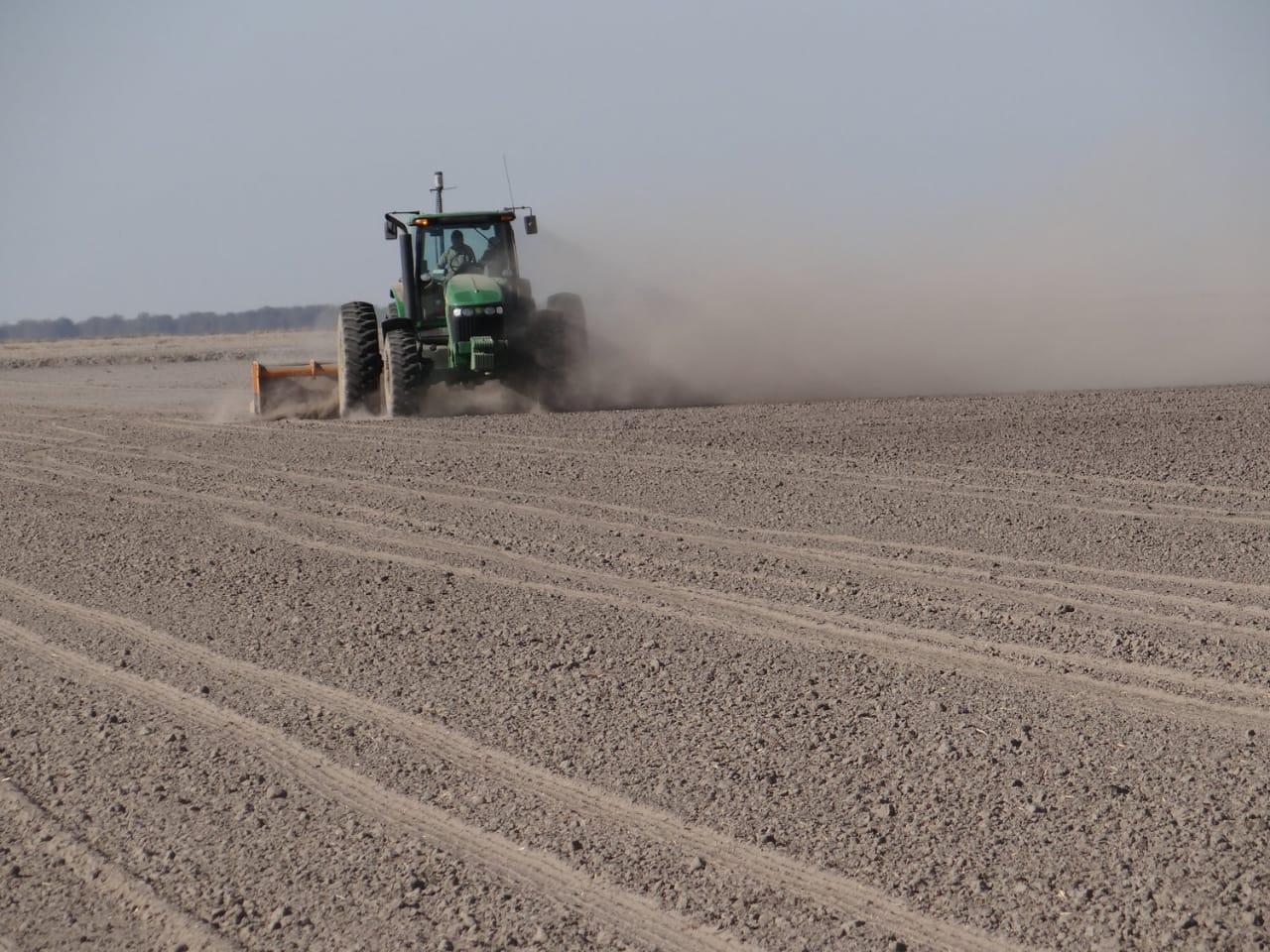 Empresa de Semillas, Panamá - Sacamos semilla de la más alta calidad gracias al sistema de riego y drenaje que nos permite sembrar en la mejor época de producción durante el verano.Proyecto
