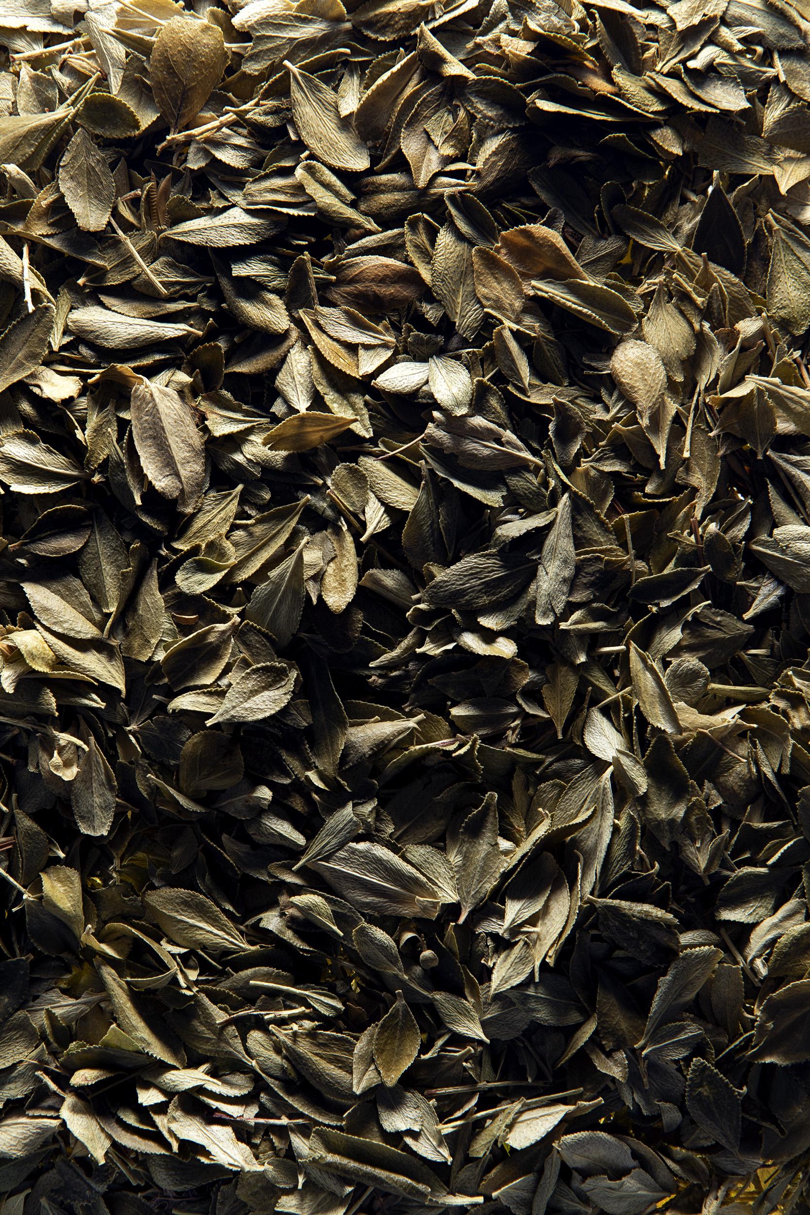 BUCHU (Barosma betulina)