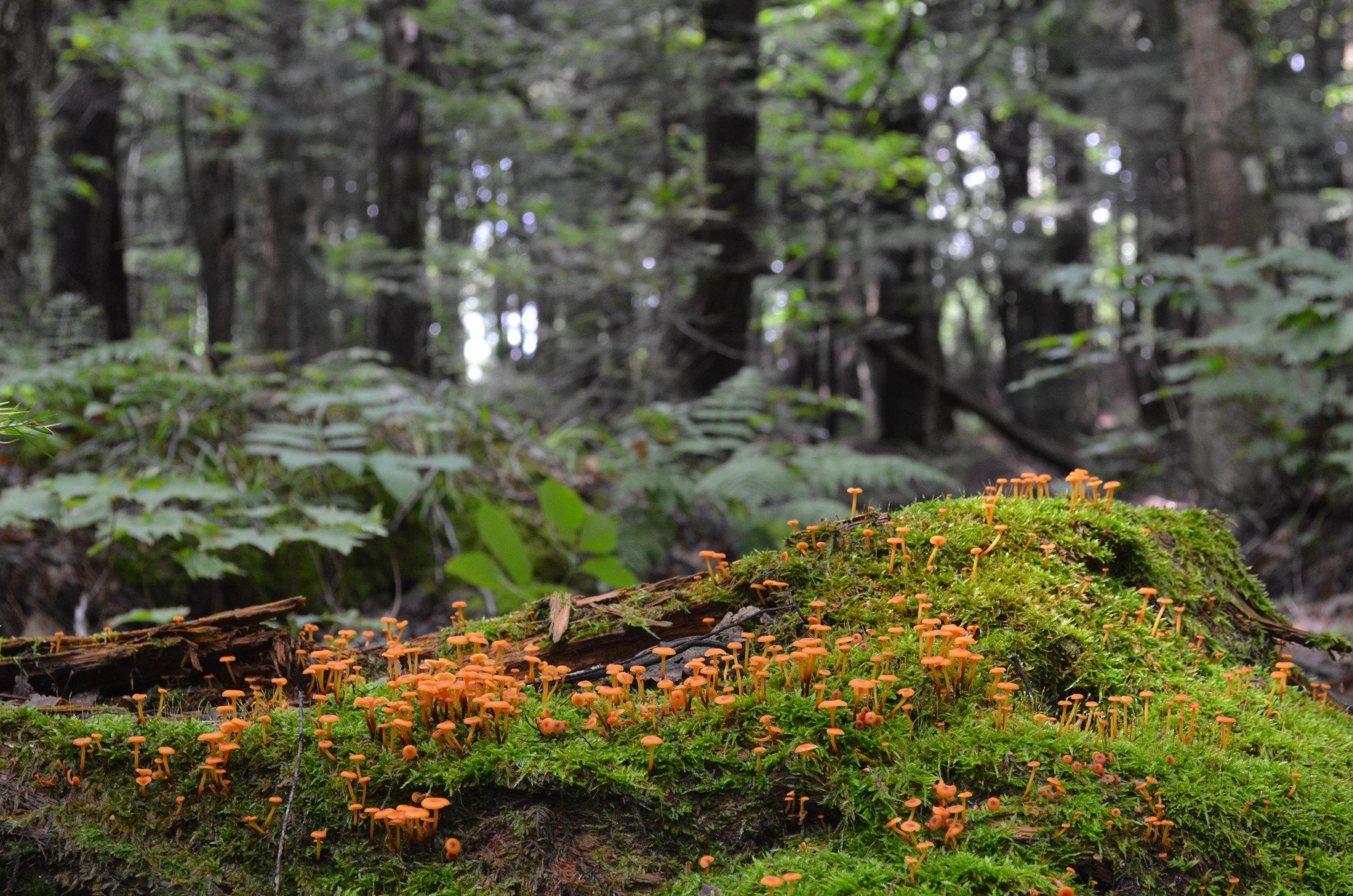 Mushrooms along the trail