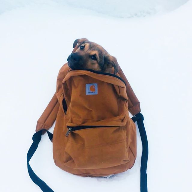 All packed for the weekend! Meet the newest member of Verde team! Timber is 2 months old and still a little afraid of the world, so for now, he enjoys hikes in #Durango from the comfort of the backpack. #everydayisnationalpuppyday #verdeans #dogsofinstagram #dogsinbackpacks #dogsinpacks #coloradogs 📸 @alicepbaker