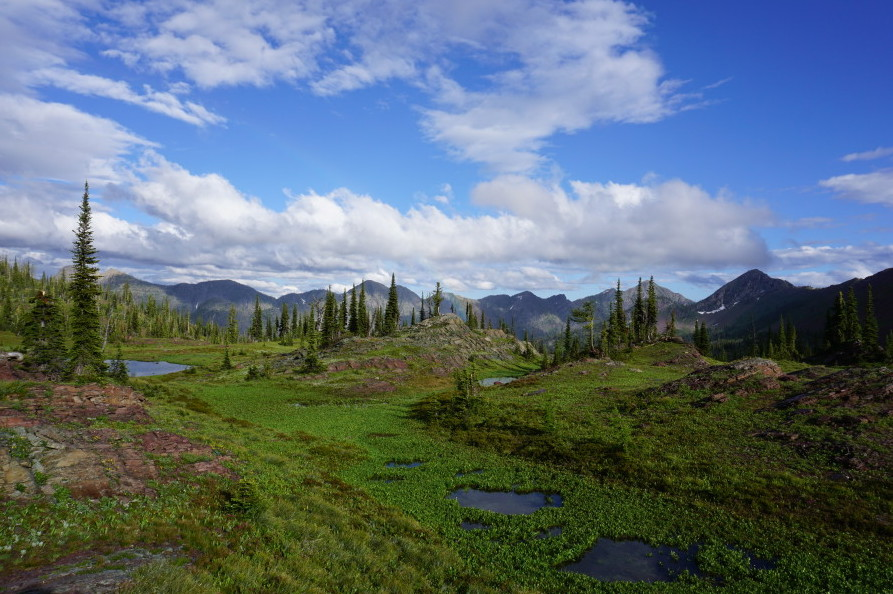 3_grizzly-basin-by-zack-porter-.jpg