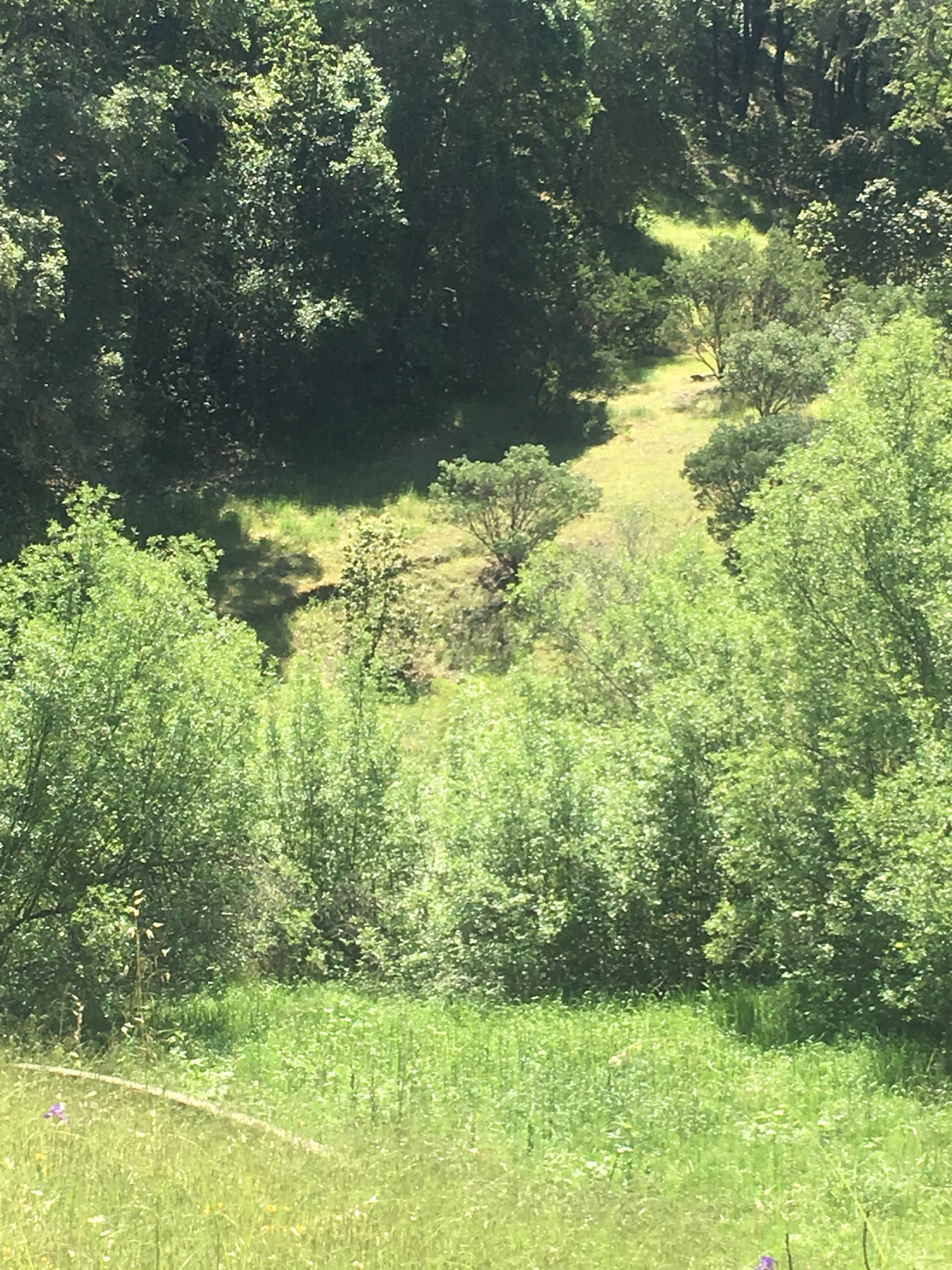 Green meadows and hiking trails on listing in Yorkville.