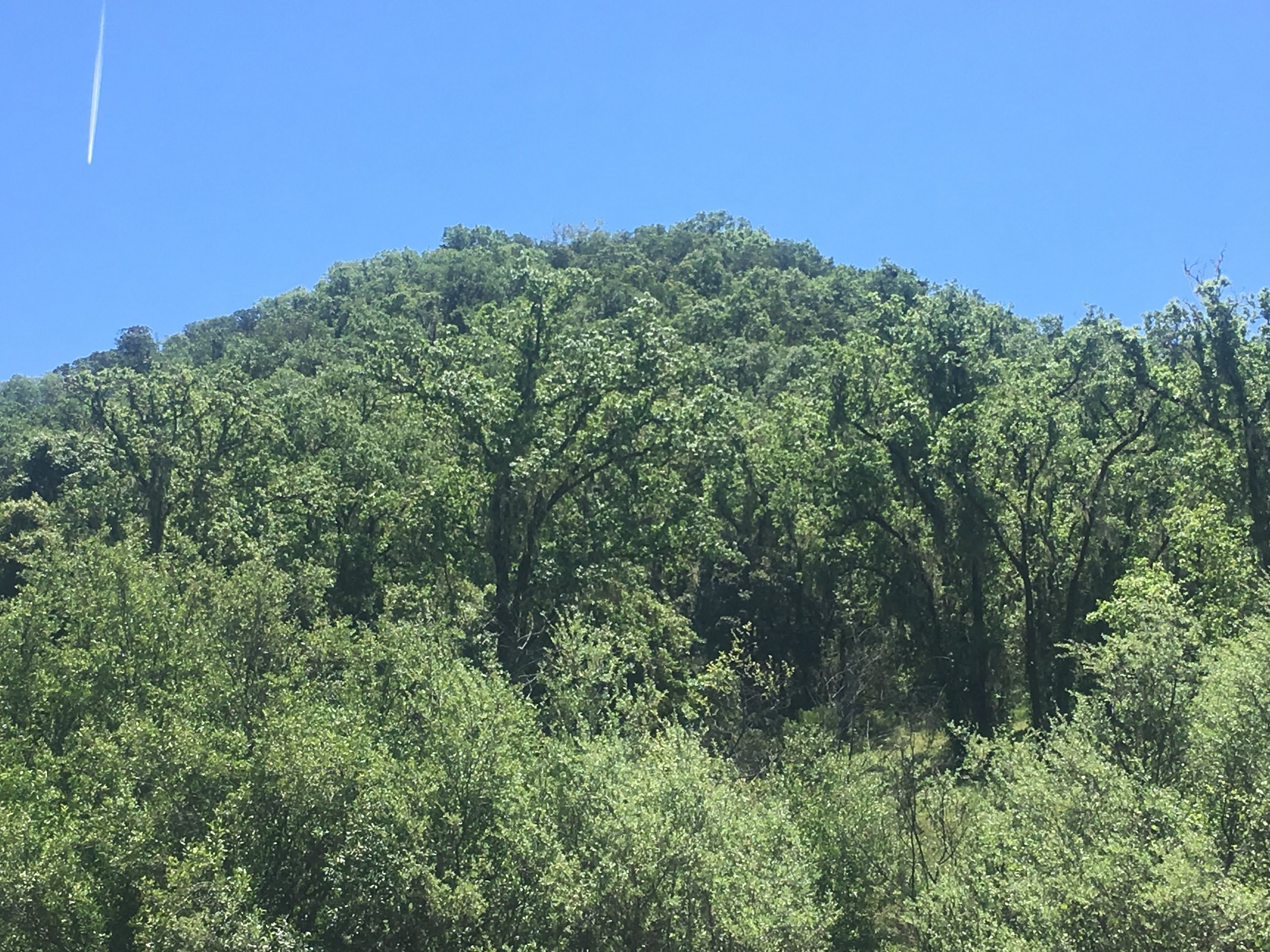 Hill top with possible view sites near Yorkville on 40 acres.