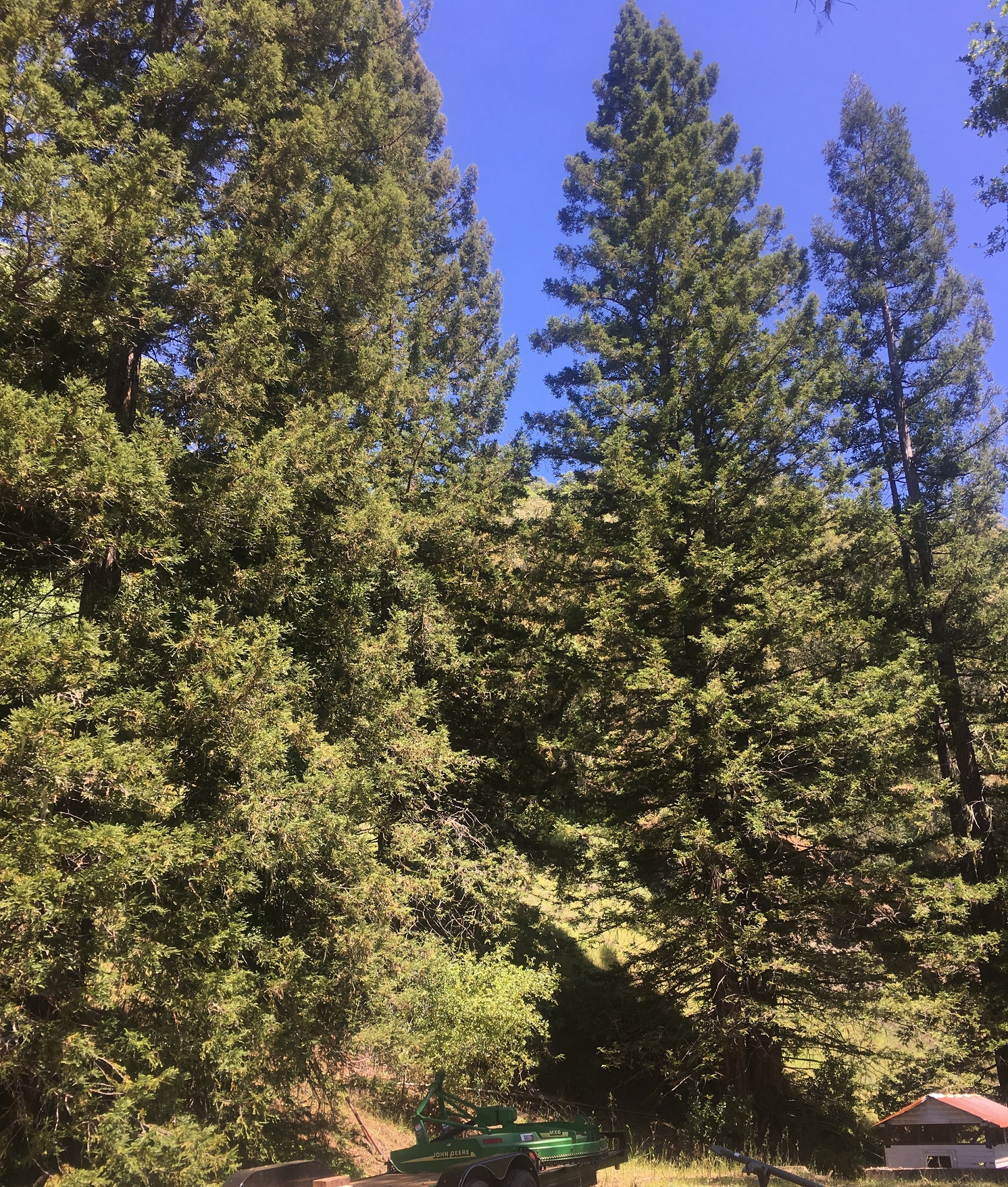 40 acres of trees and meadows with a small cabin near Yorkville in Mendocino county.