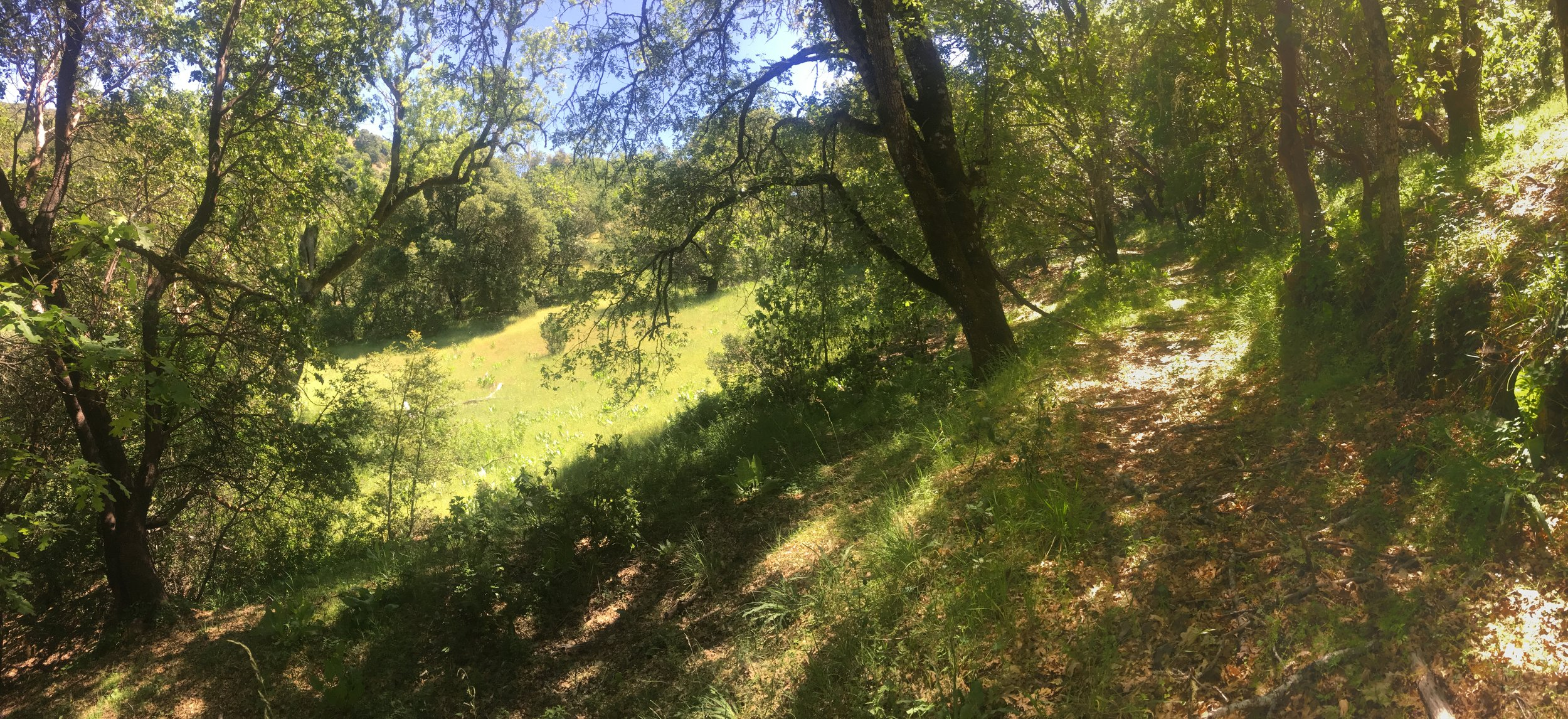 Hillside, meadows and trees on Yorkville 40 acre listing.
