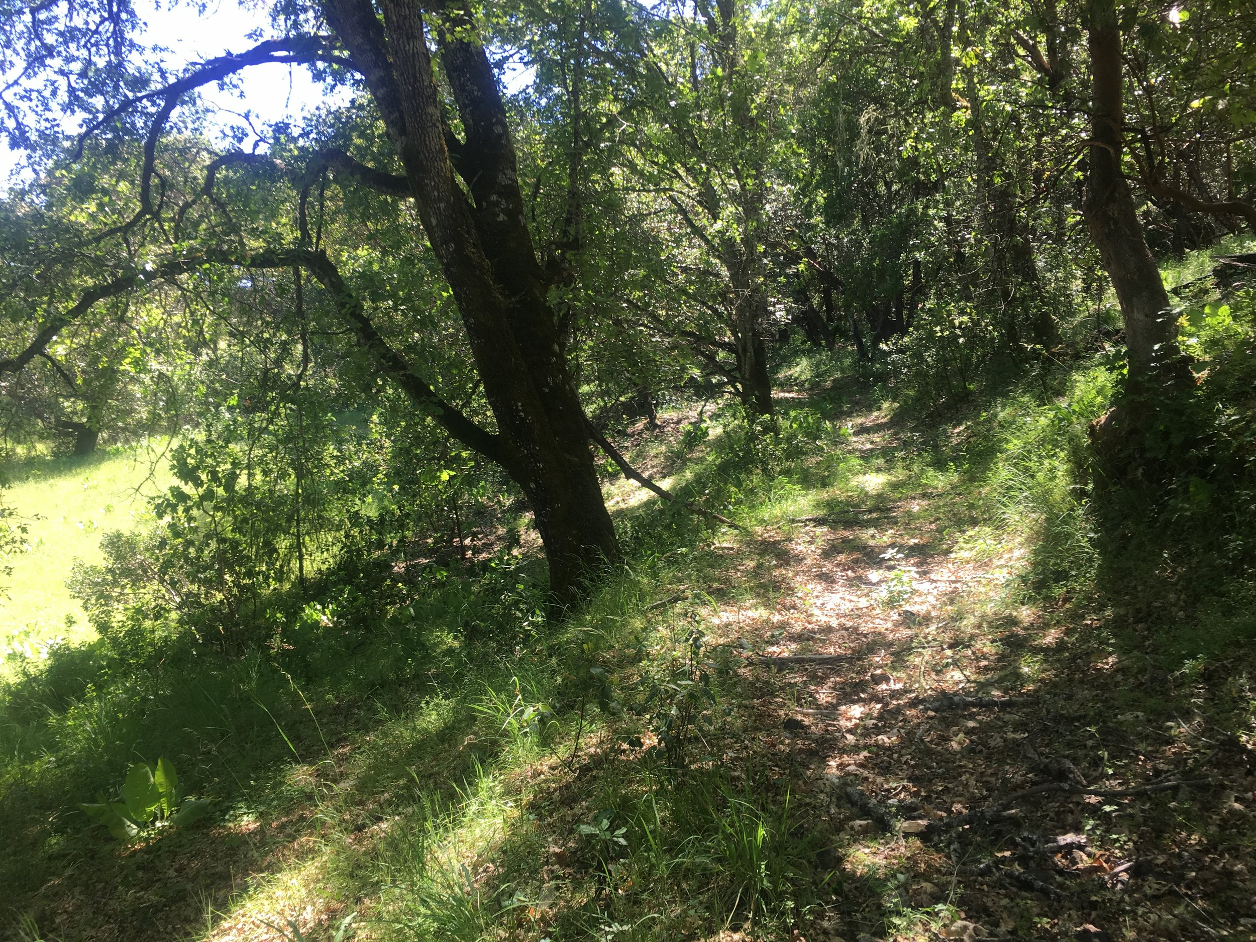 Trail on the 40 acre parcel for sale in Yorkville.