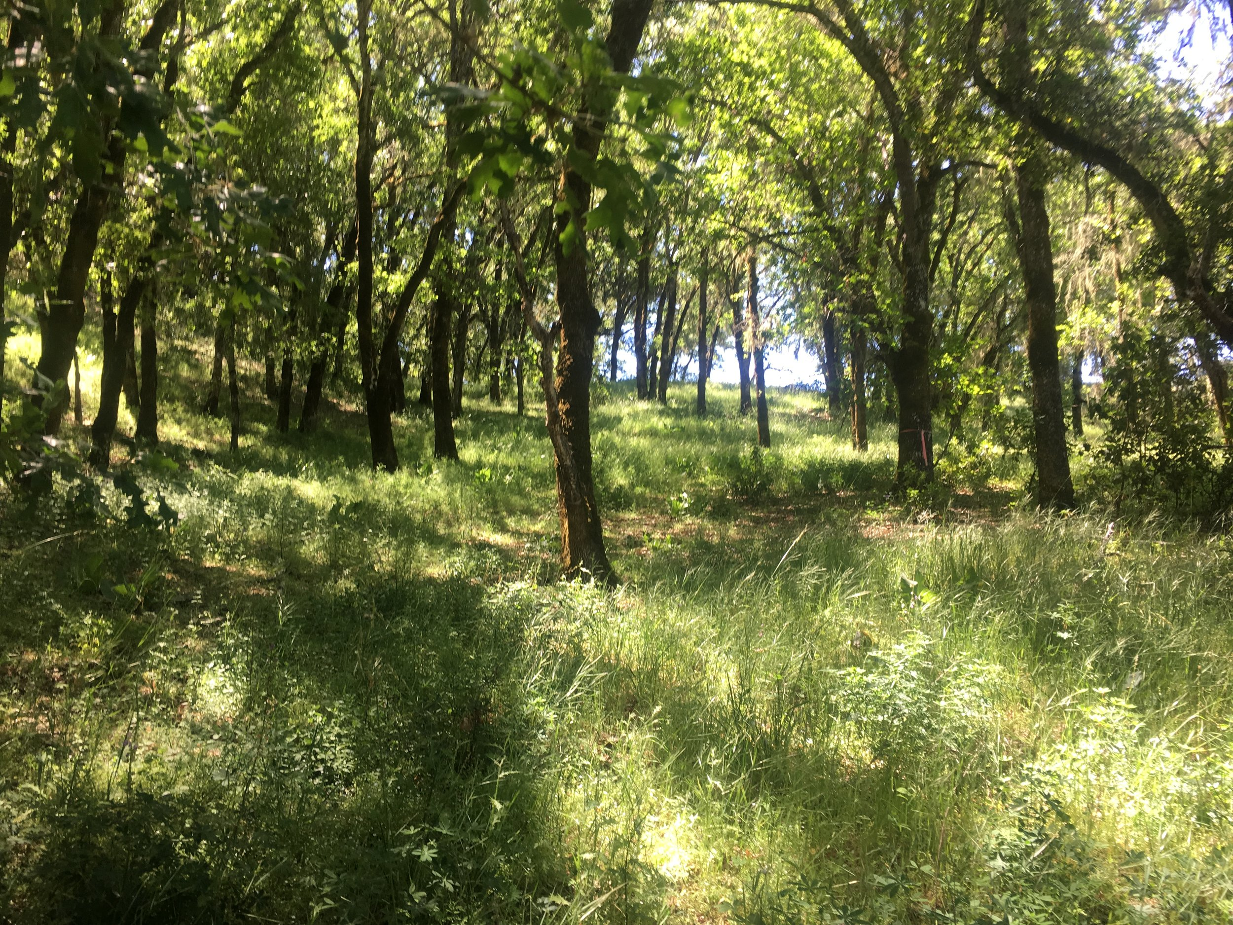 The forest trail for sale with parcel off Mountain House Road, Yorkville, CA.